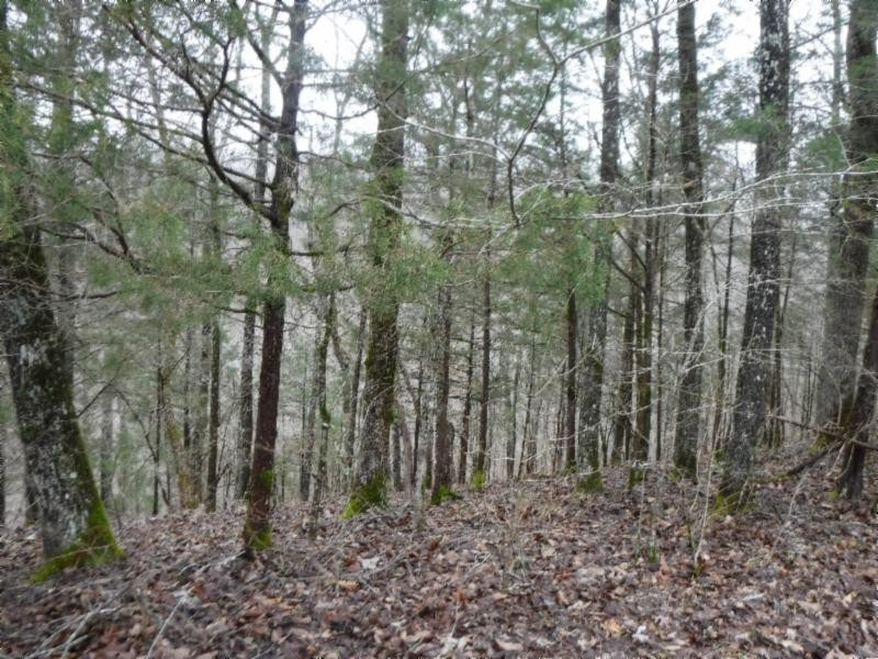 5 Backwoods Trails Lane Property Photo - Celina, TN real estate listing