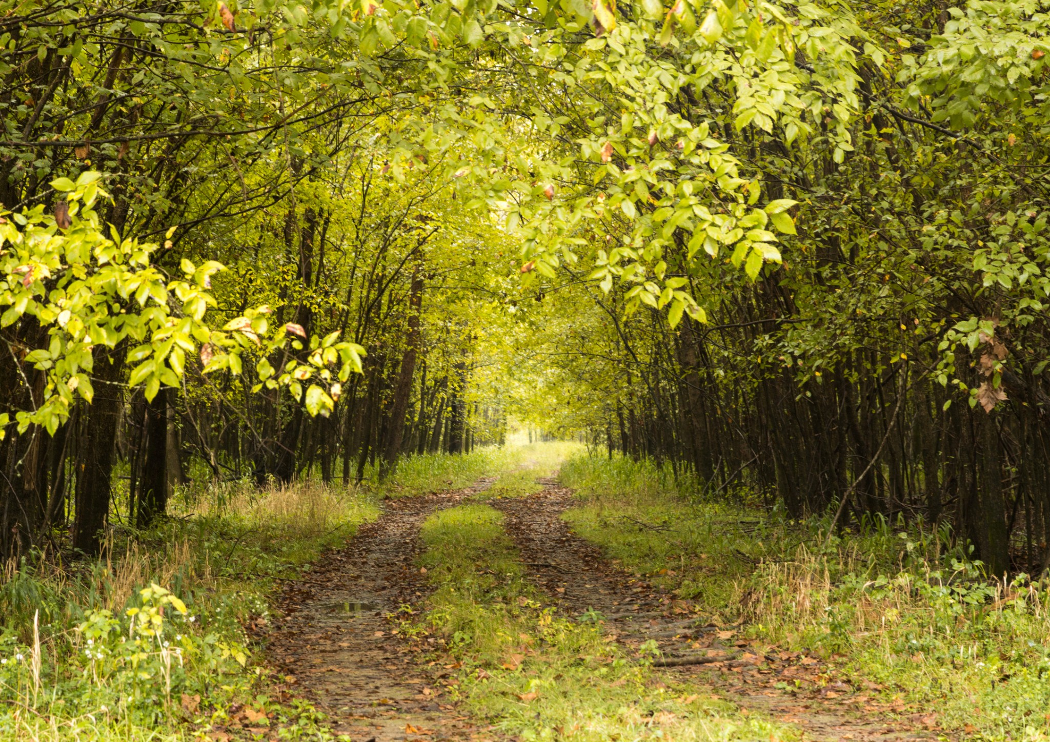 279 Ridgeway Dr Property Photo - Sugar Tree, TN real estate listing