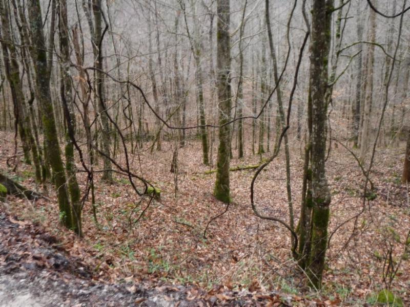 72 Dry Creek Rd Property Photo - Jamestown, TN real estate listing