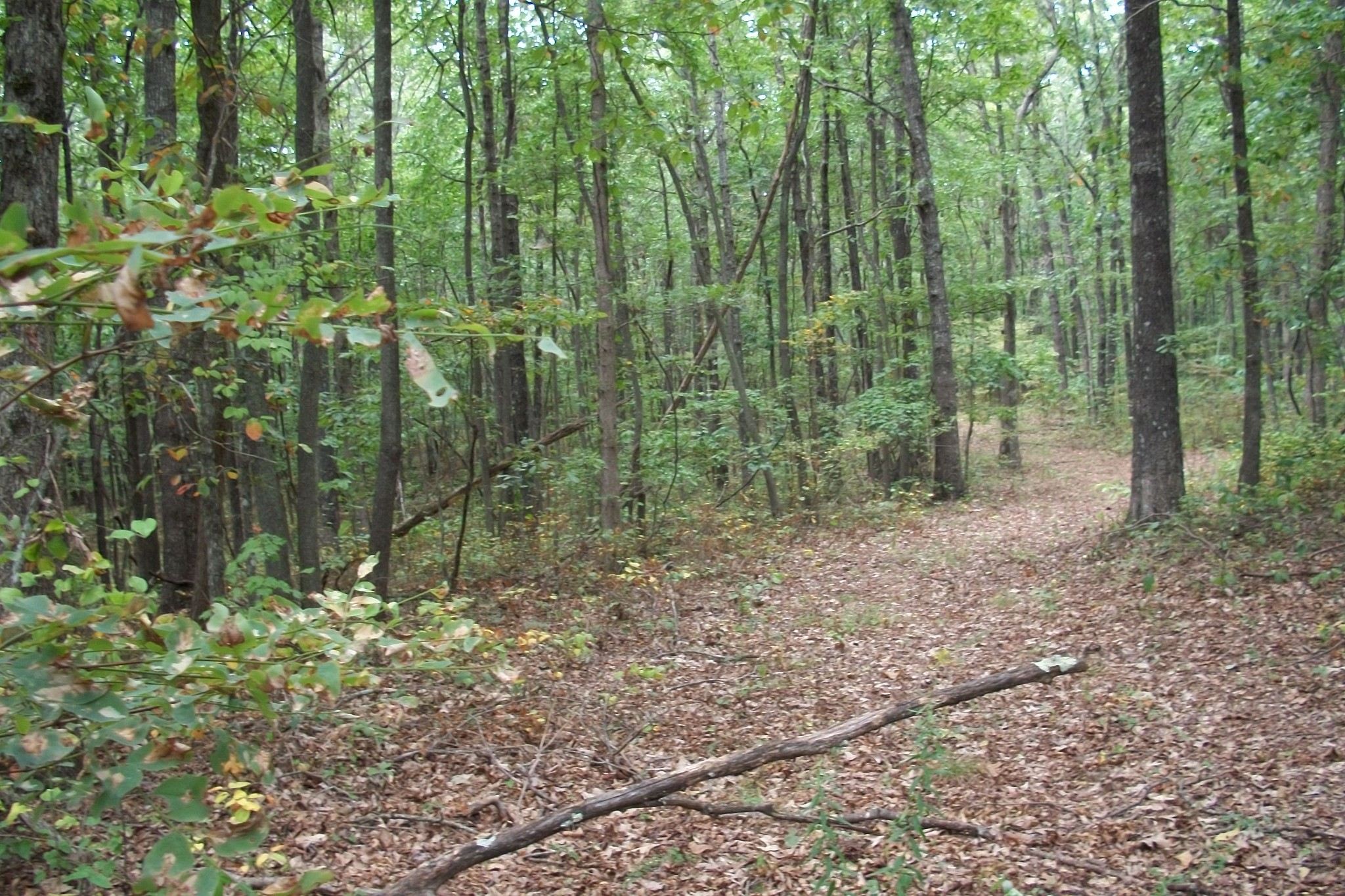 0 Snake Pond Rd Property Photo - Sewanee, TN real estate listing