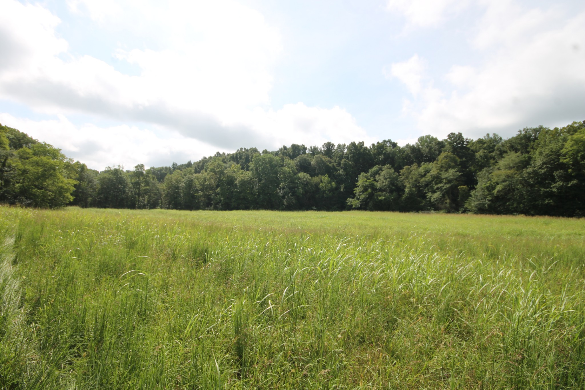 0 Buckner Rd. Property Photo - Cumberland Furnace, TN real estate listing