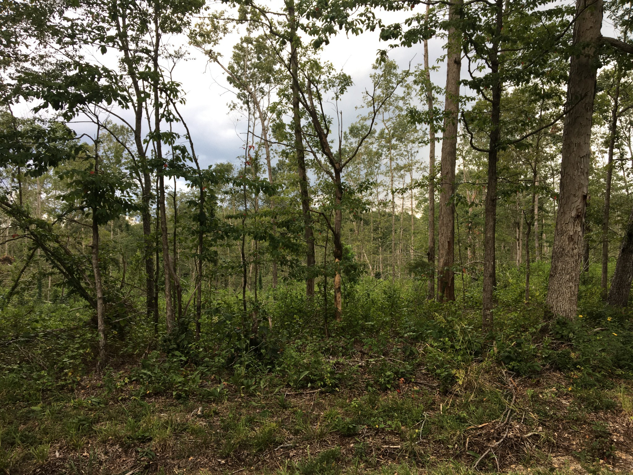 0 Deep Cut Road Property Photo - Erin, TN real estate listing