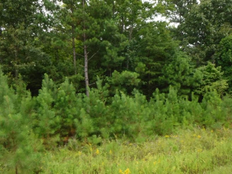 16 .27ac Hanging Limb Hwy Property Photo - Crawford, TN real estate listing