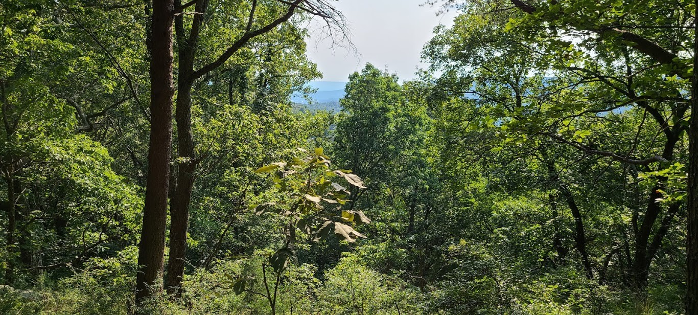 0 Indian Camp Road, Lot 24 Property Photo - Altamont, TN real estate listing