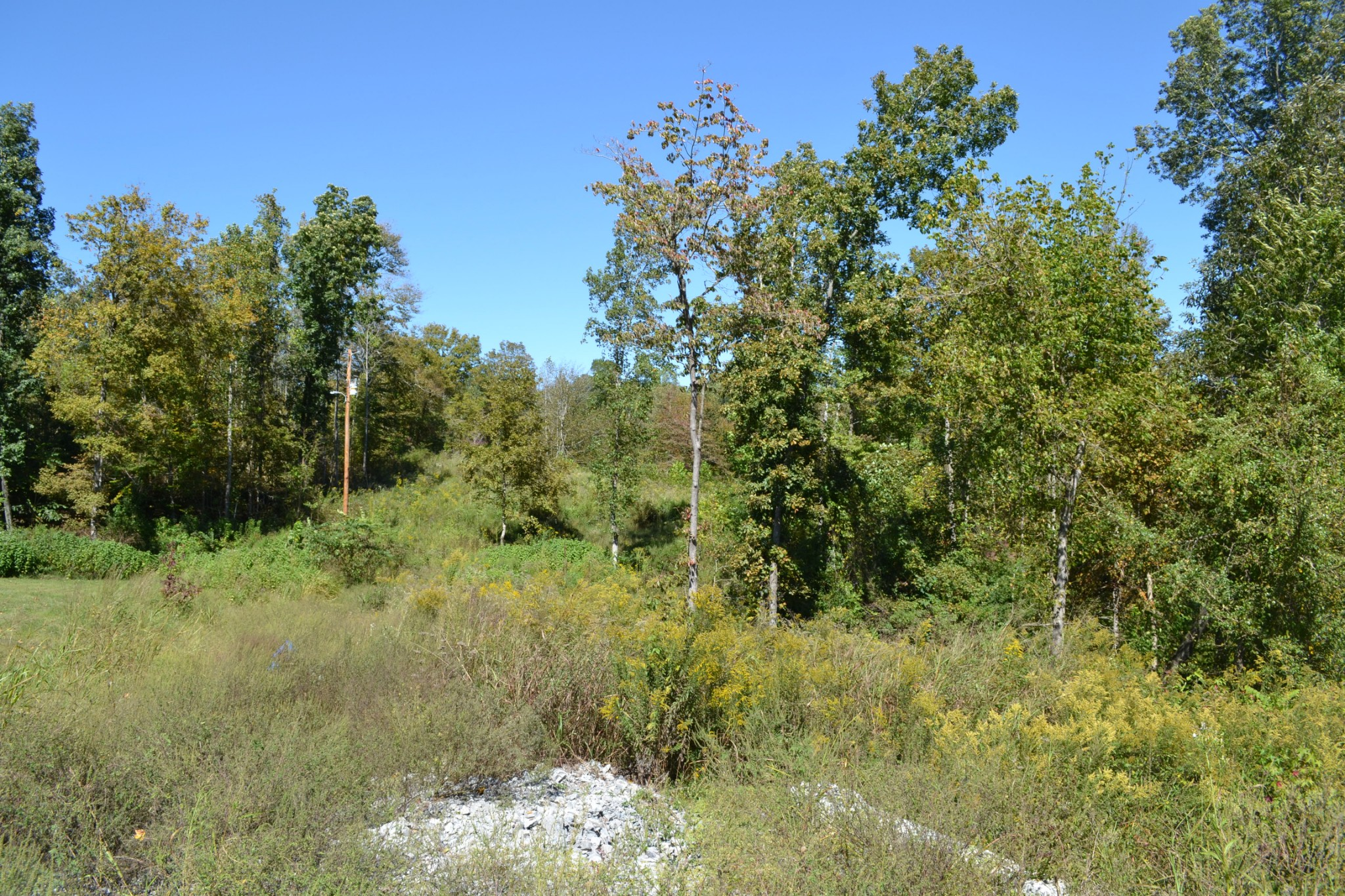 2805 Highway 149 Property Photo - Palmyra, TN real estate listing