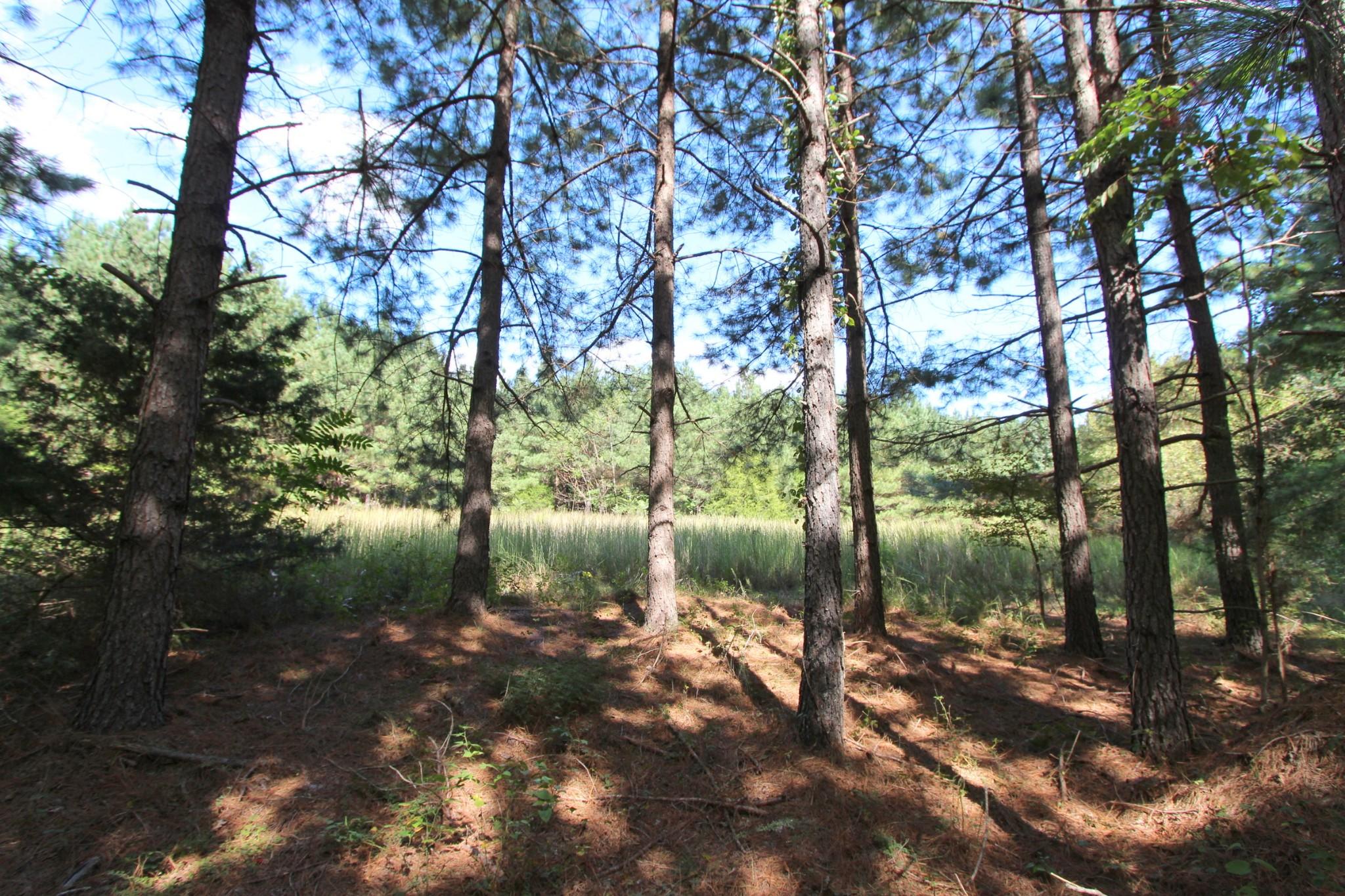 0 Indian Creek Rd Property Photo - MC EWEN, TN real estate listing