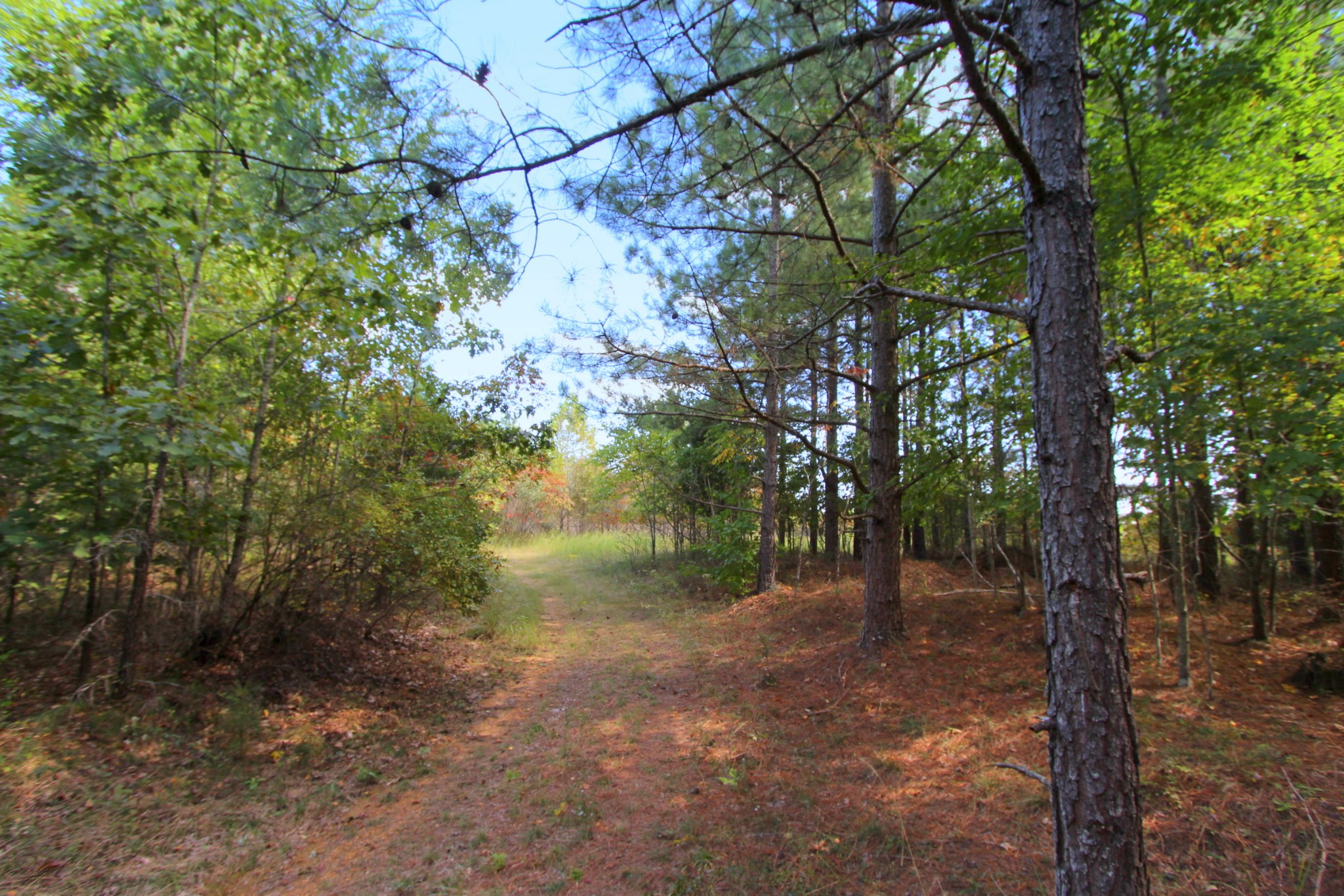 0 Indian Creek Rd Property Photo - MC EWEN, TN real estate listing