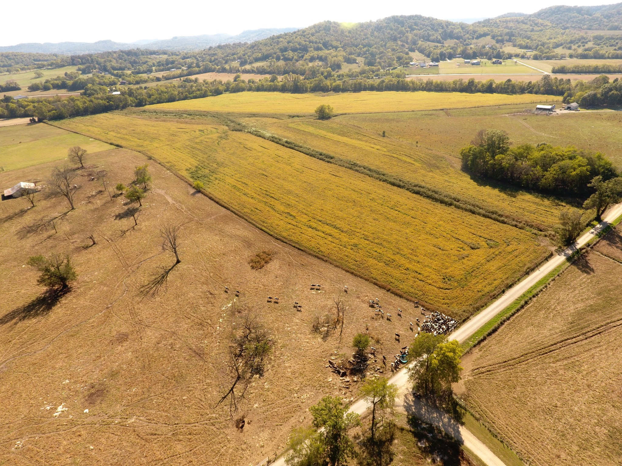 0 Cheese Rd Property Photo - Petersburg, TN real estate listing