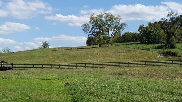 2 Pulaski Hwy Property Photo - Cornersville, TN real estate listing