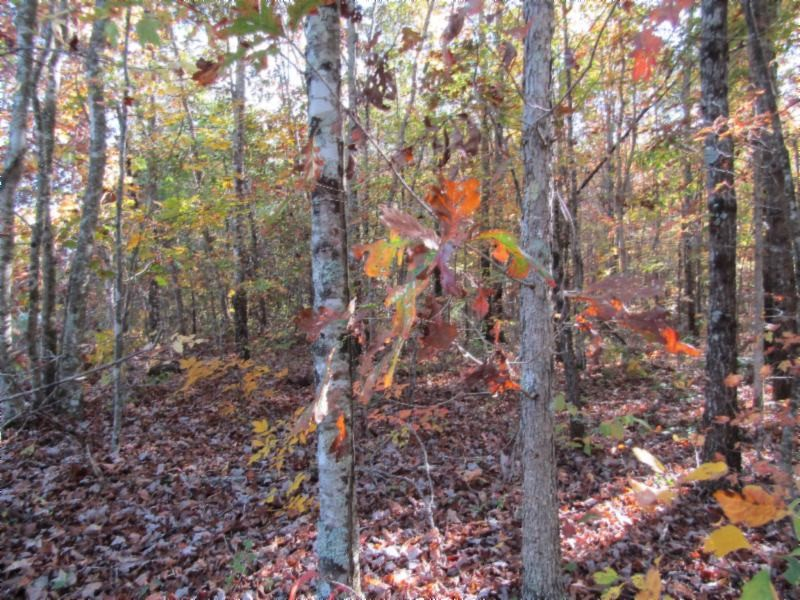 33 Panther Falls Rd Property Photo - Wilder, TN real estate listing