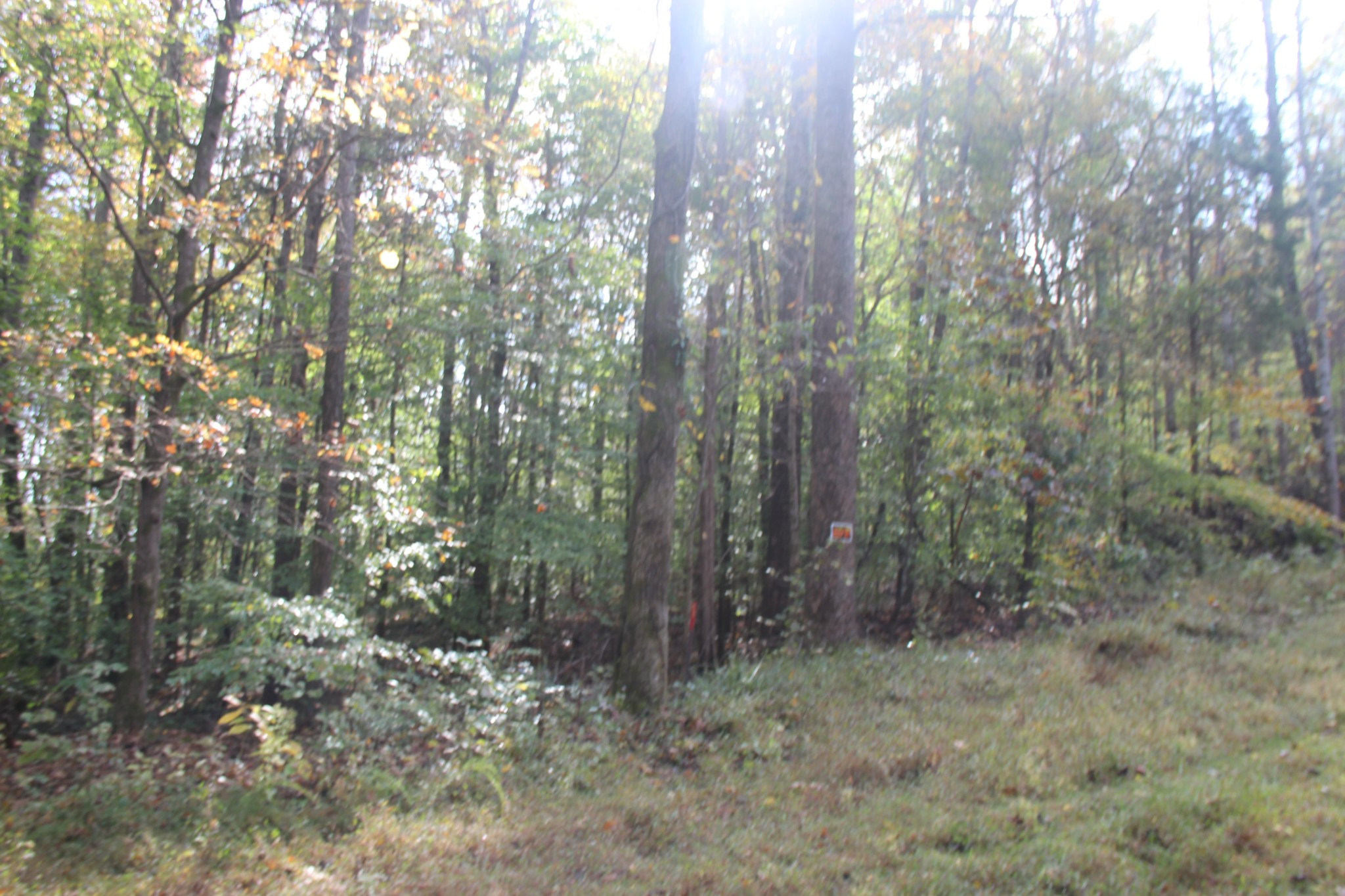 0 Saline Trail N Property Photo - Bumpus Mills, TN real estate listing