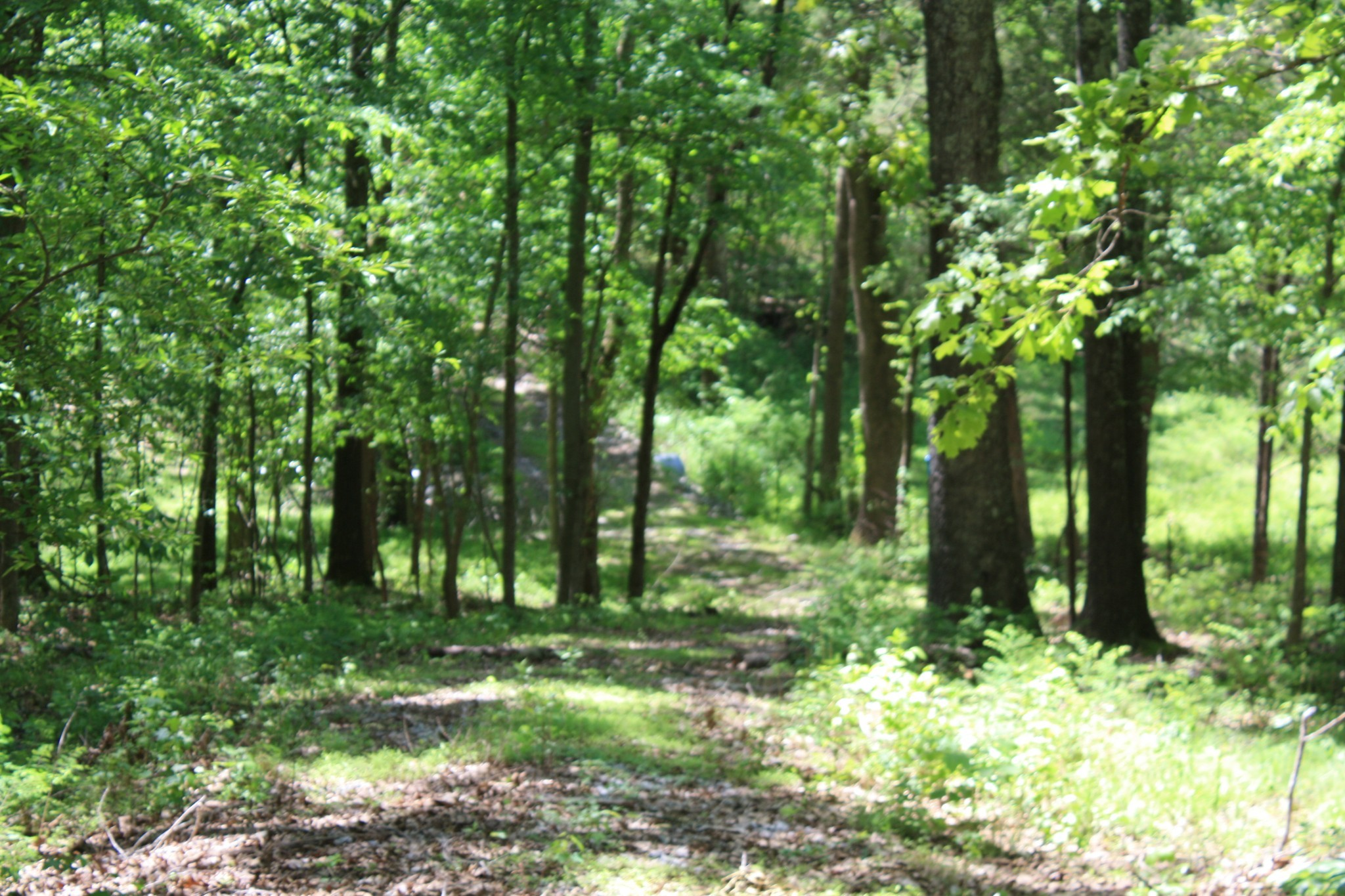 1 Grices Creek Road Property Photo - Cumberland City, TN real estate listing
