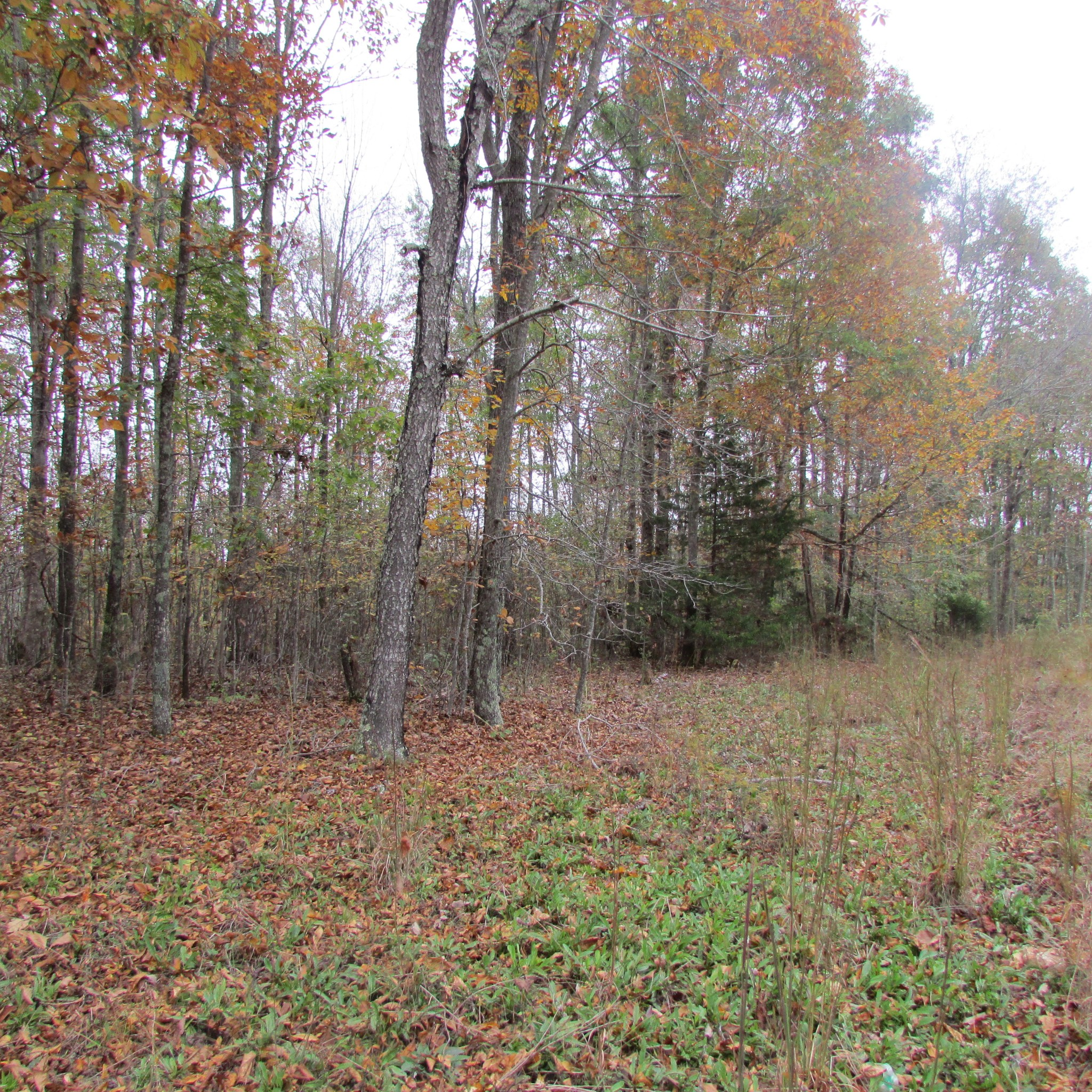 170 Coble Ln W Property Photo - Waynesboro, TN real estate listing