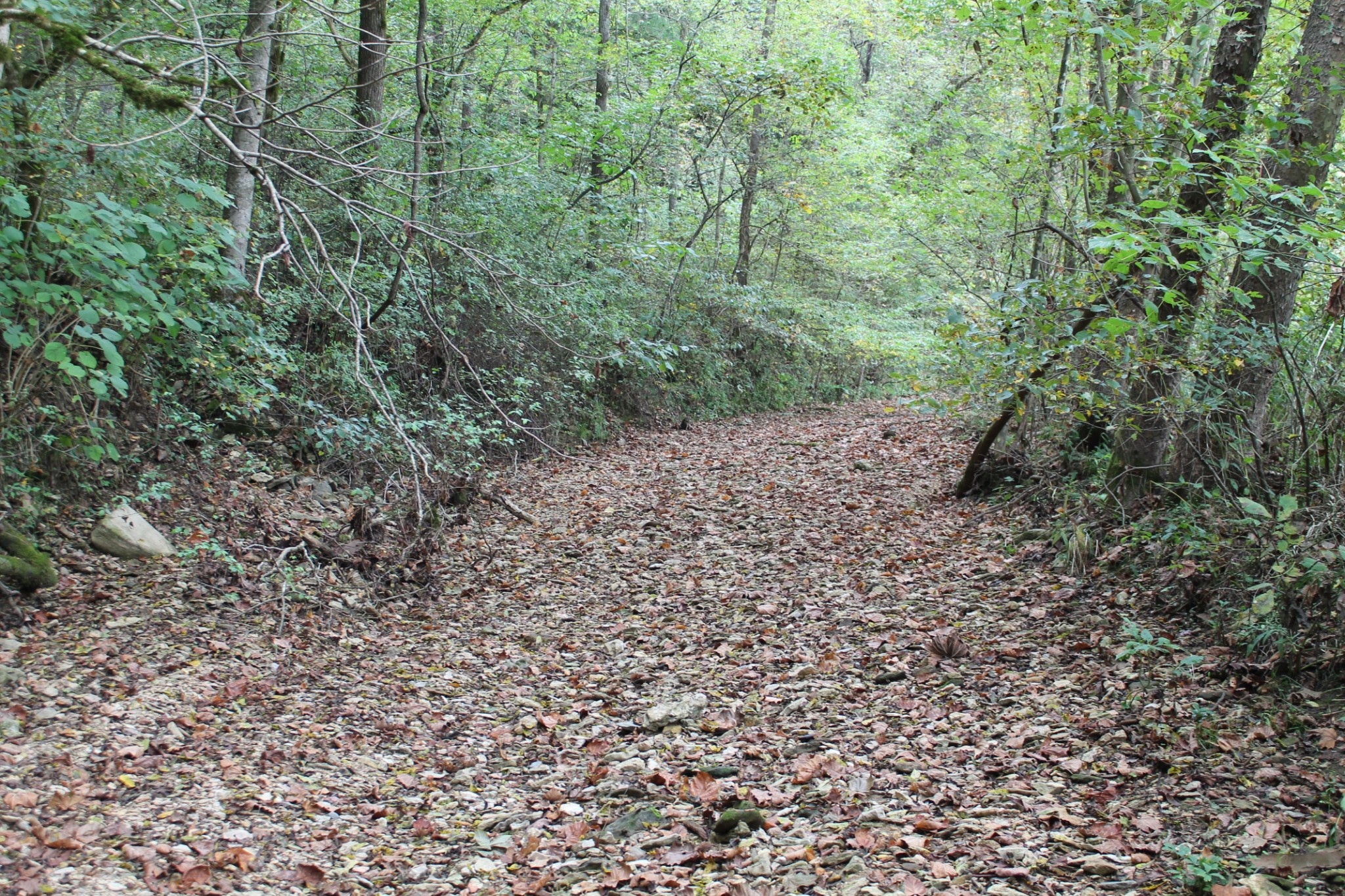 442 N Fork Rd Property Photo - Whitleyville, TN real estate listing