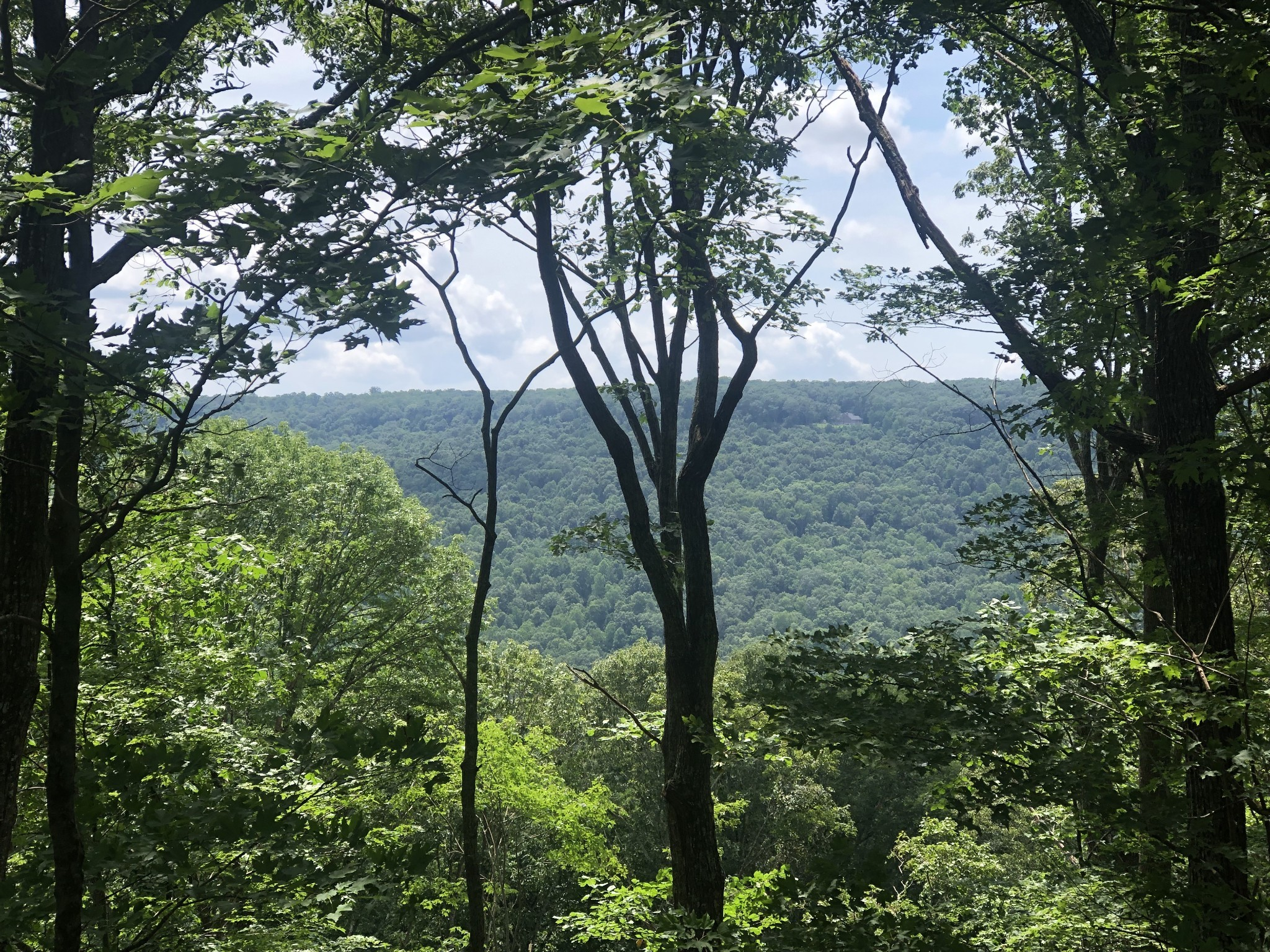 0 Can-Tex Road Property Photo - Sewanee, TN real estate listing