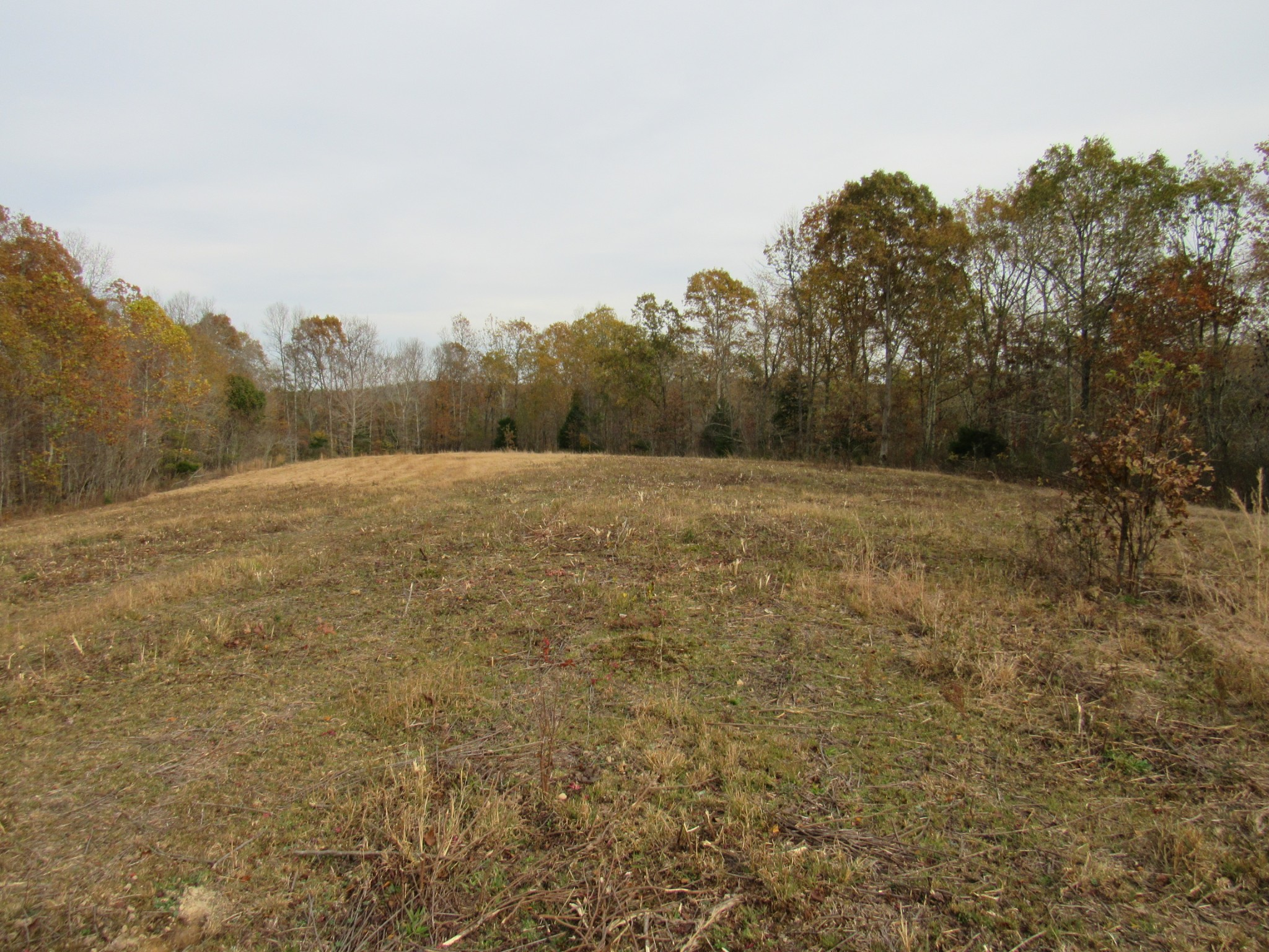 0 White Oak Rd Property Photo - MC EWEN, TN real estate listing