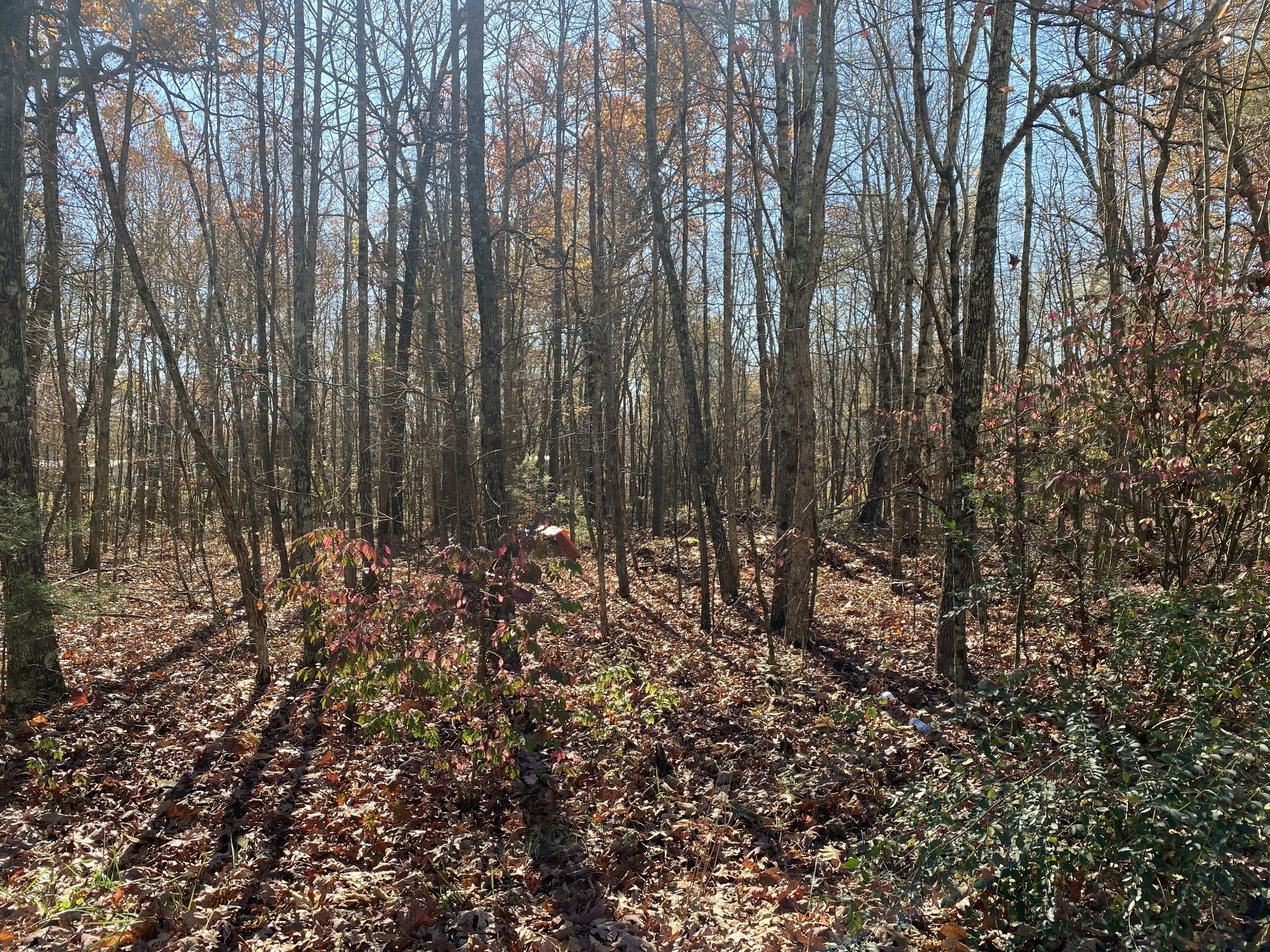 1 Maple Drive Property Photo - Beechgrove, TN real estate listing