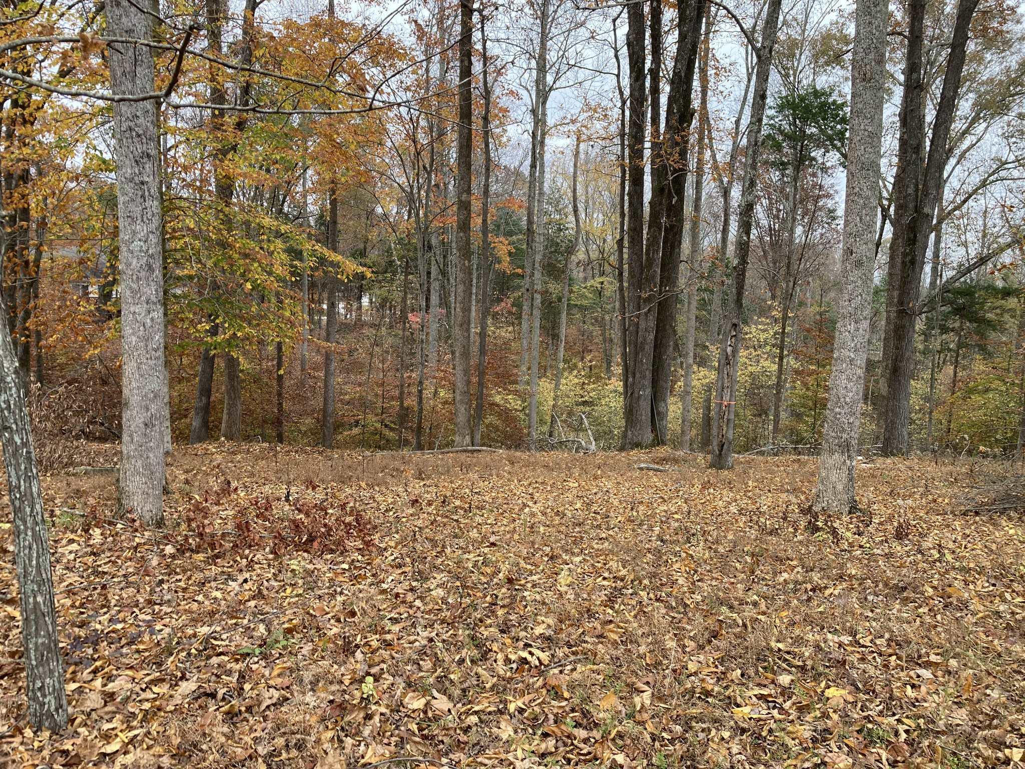 0 Ridgeview Run Property Photo - Lynchburg, TN real estate listing