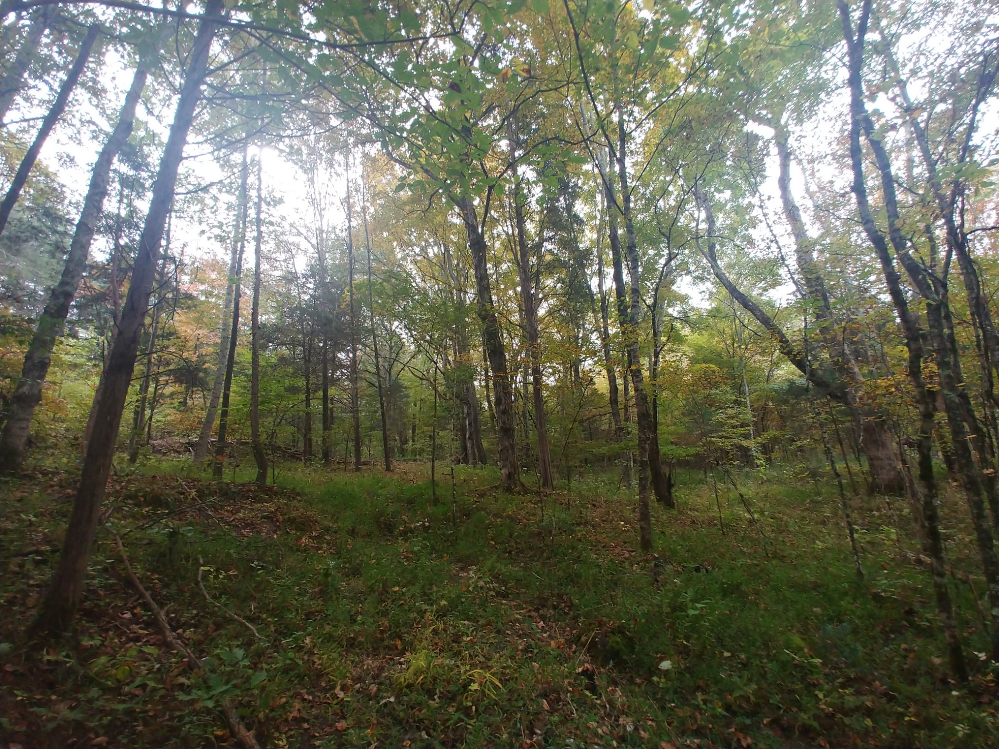 0 Bahne Rd. Property Photo - Fairview, TN real estate listing
