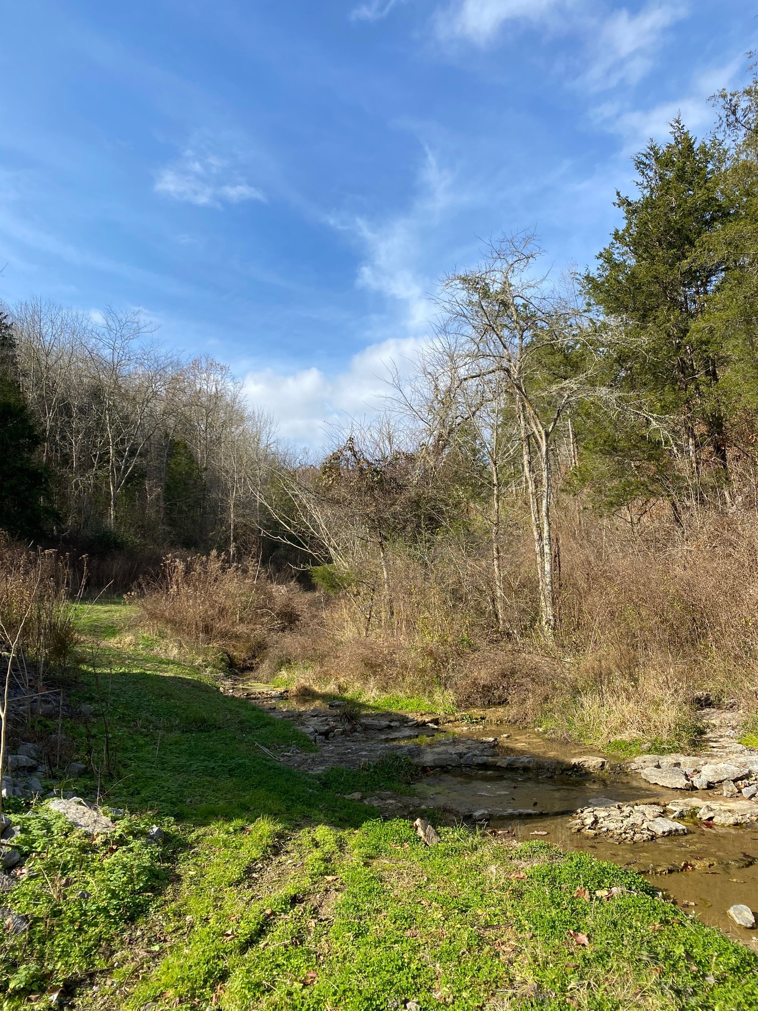 0 Old Spivey Ln Property Photo - Whitleyville, TN real estate listing