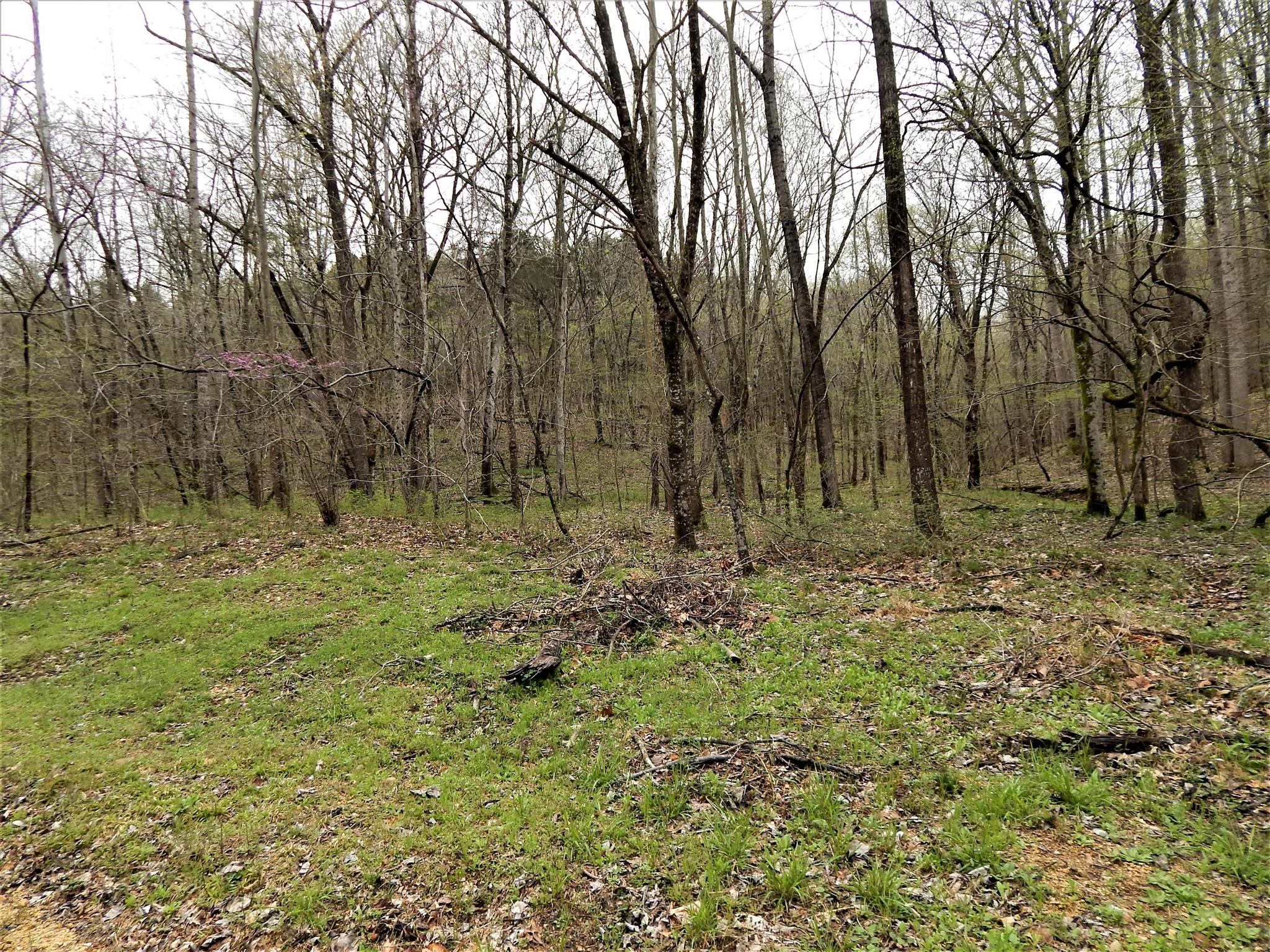 0 Warren Hollow Rd Property Photo - Clifton, TN real estate listing