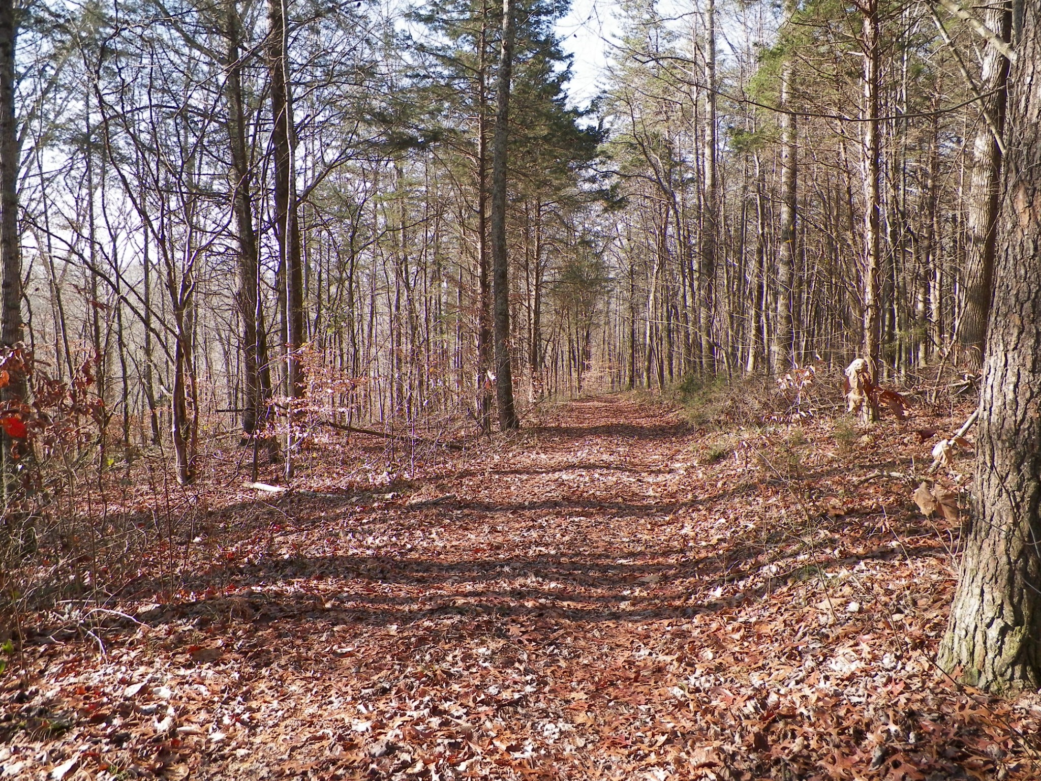 1 Hoskins Hollow Rd Property Photo - Westmoreland, TN real estate listing
