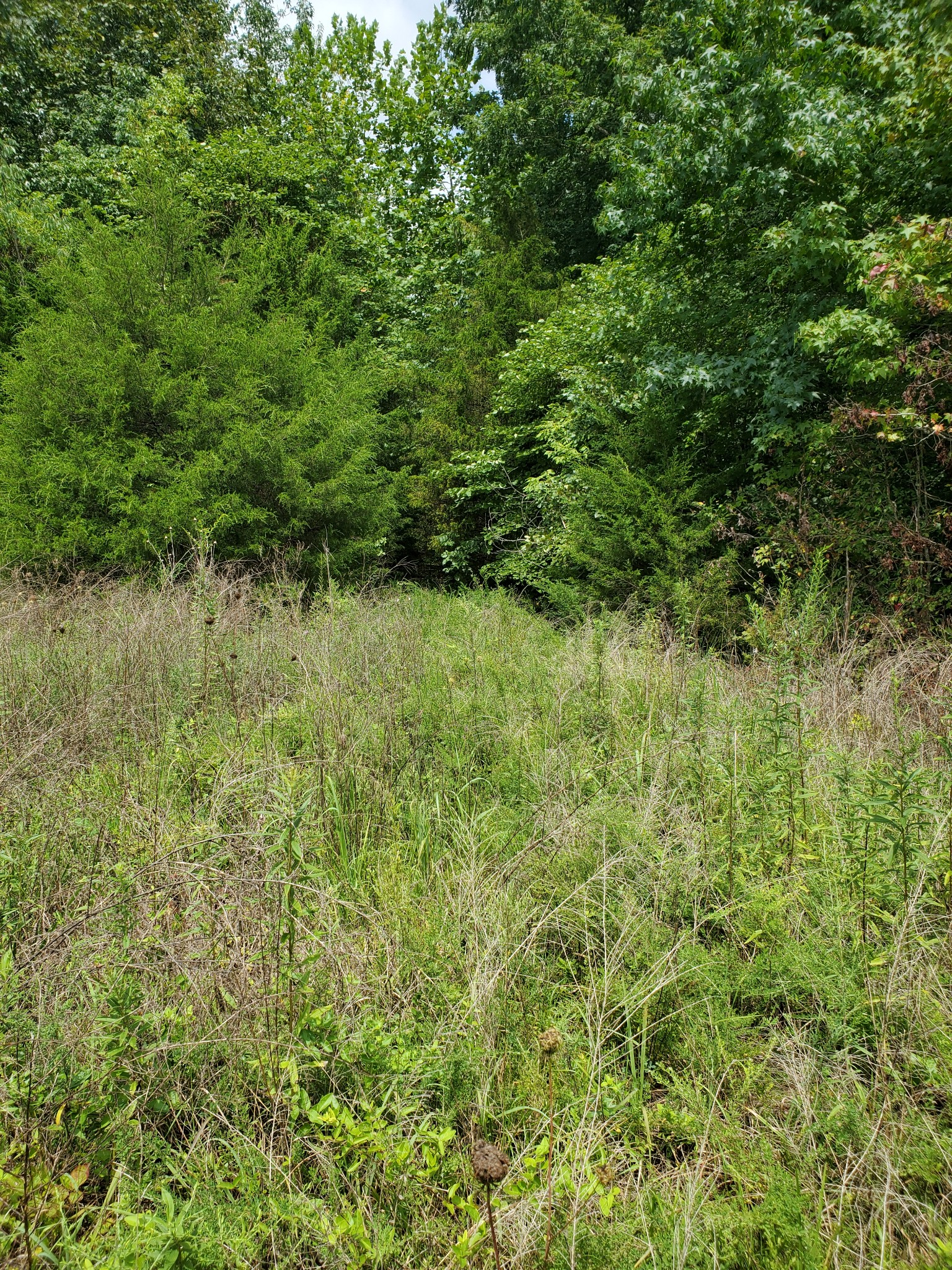 0 Robert Elliot Rd. Property Photo - Cedar Hill, TN real estate listing
