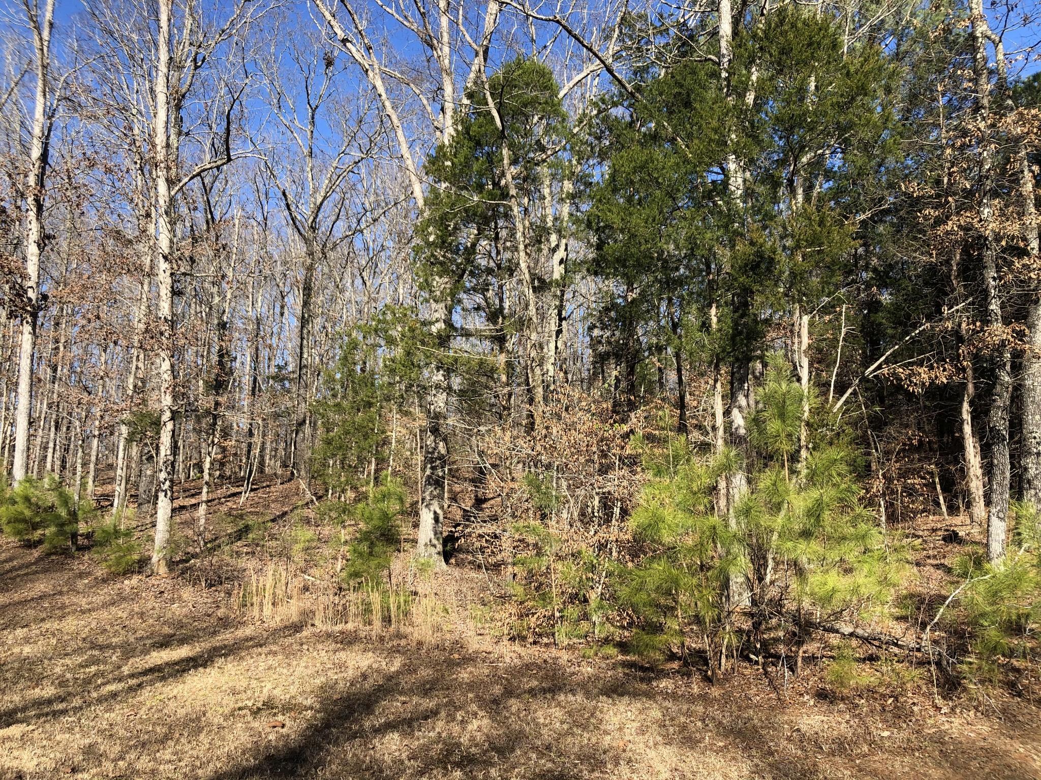 991 Strike King DR Property Photo - Cedar Grove, TN real estate listing