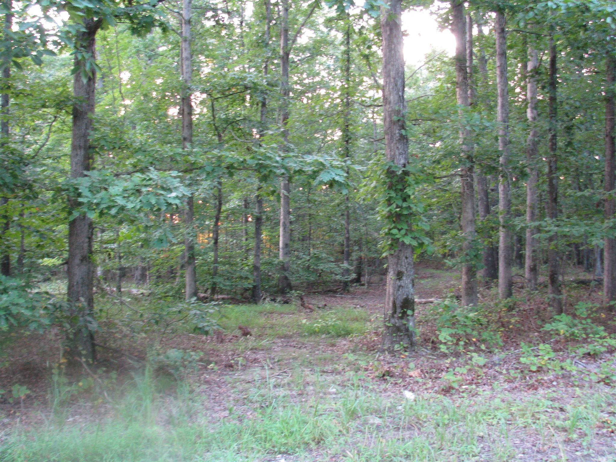 0 Pinewood Rd Property Photo - Nunnelly, TN real estate listing