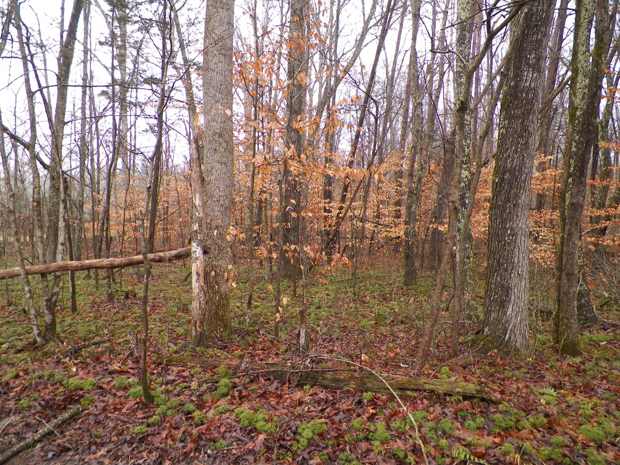 0 Rock Springs Road Property Photo - Monterey, TN real estate listing