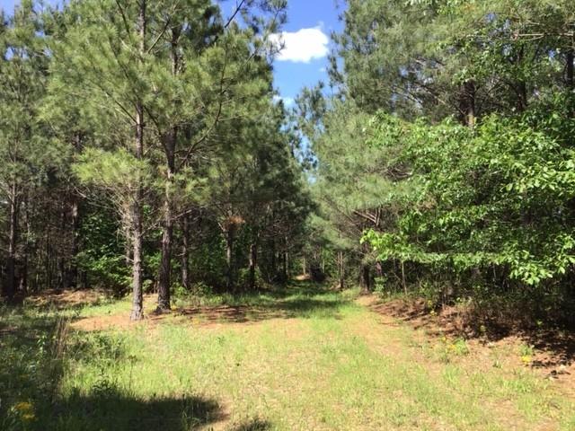 0M Waynesboro Hwy Property Photo - Hohenwald, TN real estate listing