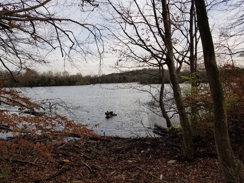 0 E Robertson Rd Property Photo - Castalian Springs, TN real estate listing
