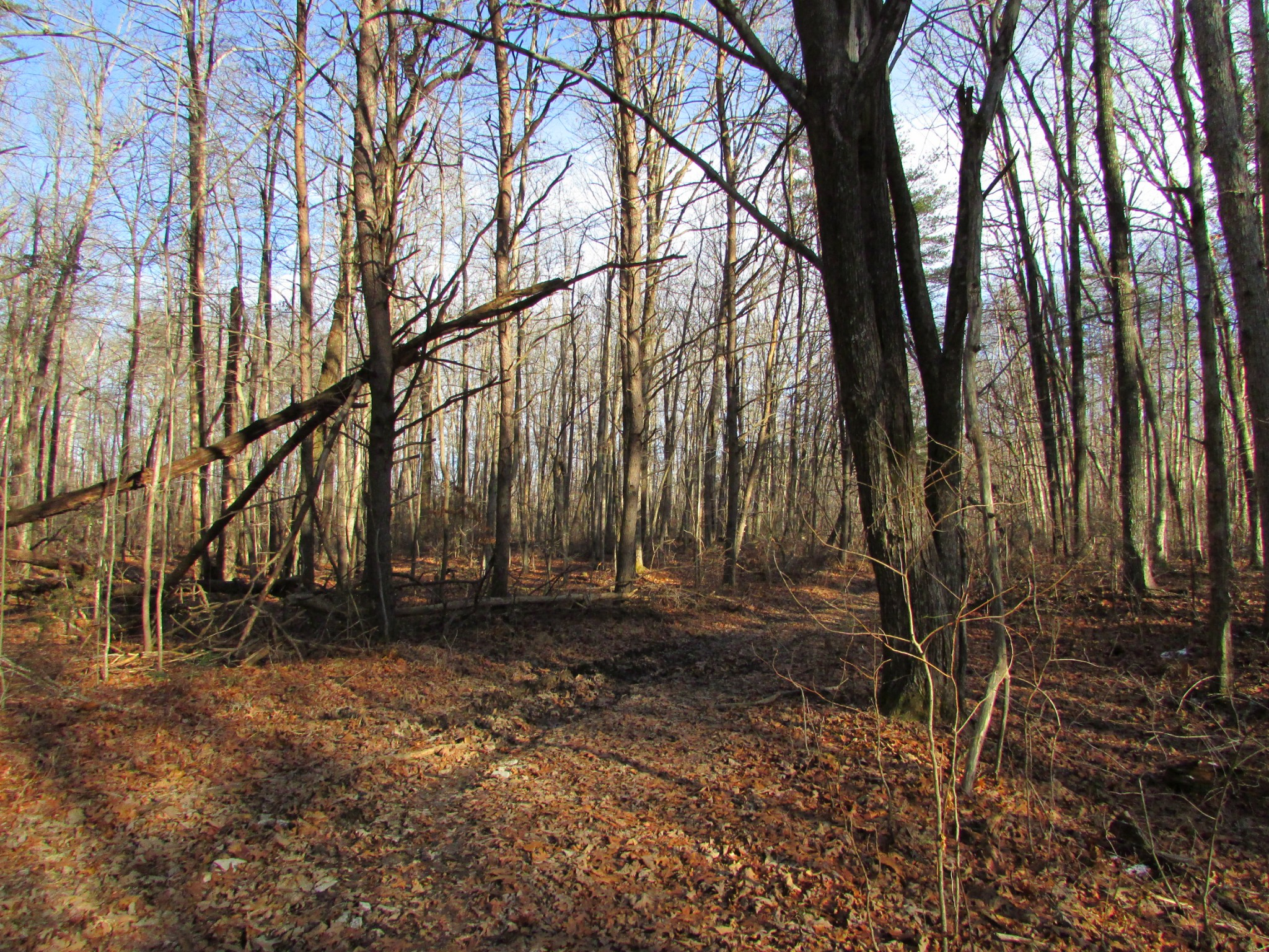 0 Joe King Rd Property Photo - Altamont, TN real estate listing
