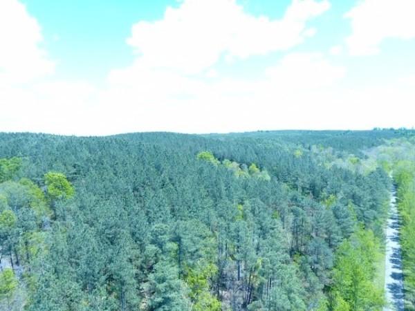 0N Sinking Creek Rd Property Photo - Hohenwald, TN real estate listing