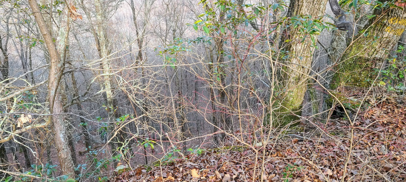 0 West of Gizzard Creek Road Property Photo - Tracy City, TN real estate listing