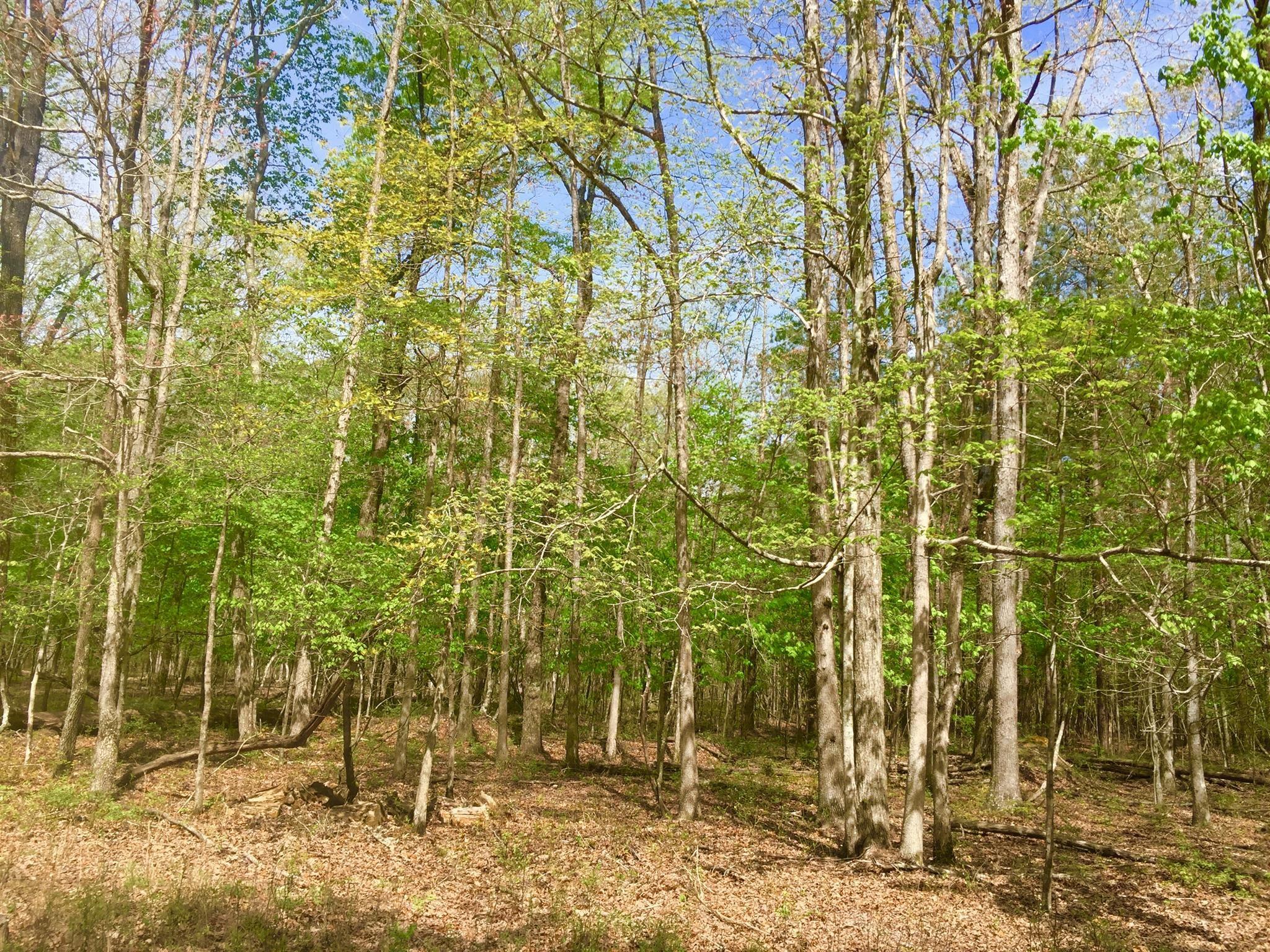 1 Chickory Ln Property Photo