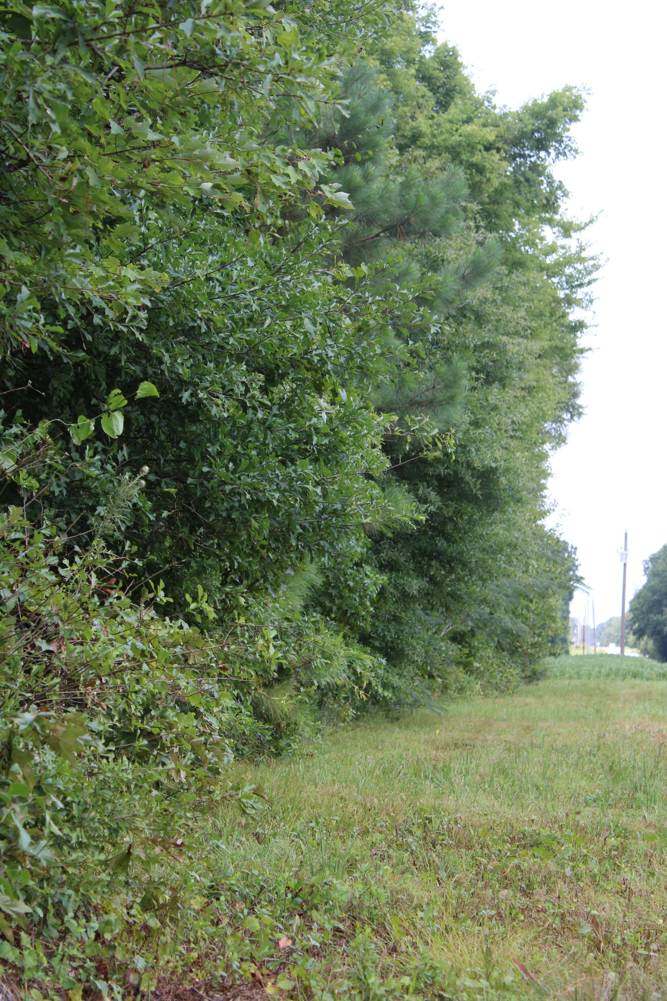 0 Old Railroad Bed Rd Property Photo - Taft, TN real estate listing