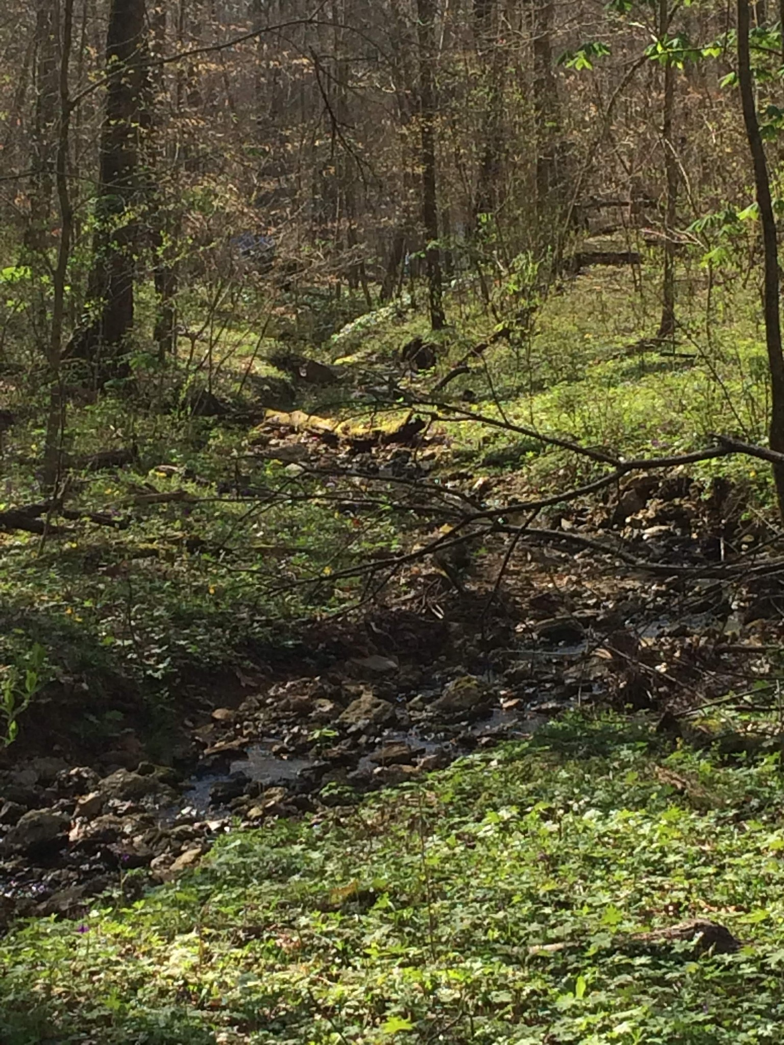 0 Old Highway 31 E Property Photo - Westmoreland, TN real estate listing