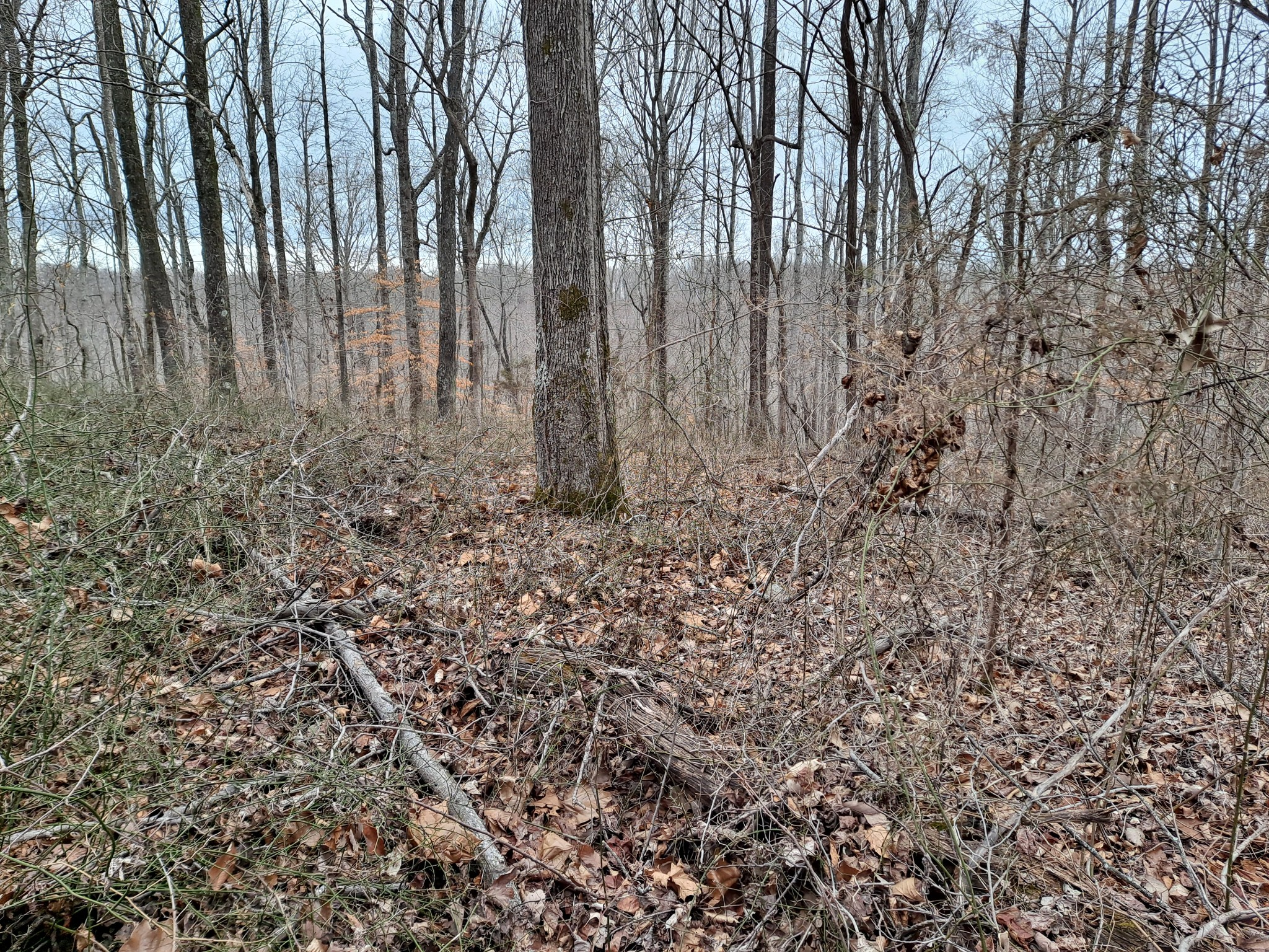 0 Sioux Trail-Tract 519 Property Photo - Pegram, TN real estate listing