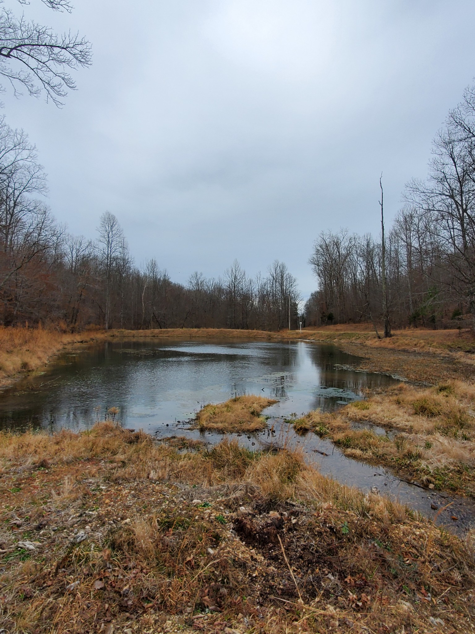 215 Bar Bee Rd Property Photo - Hohenwald, TN real estate listing