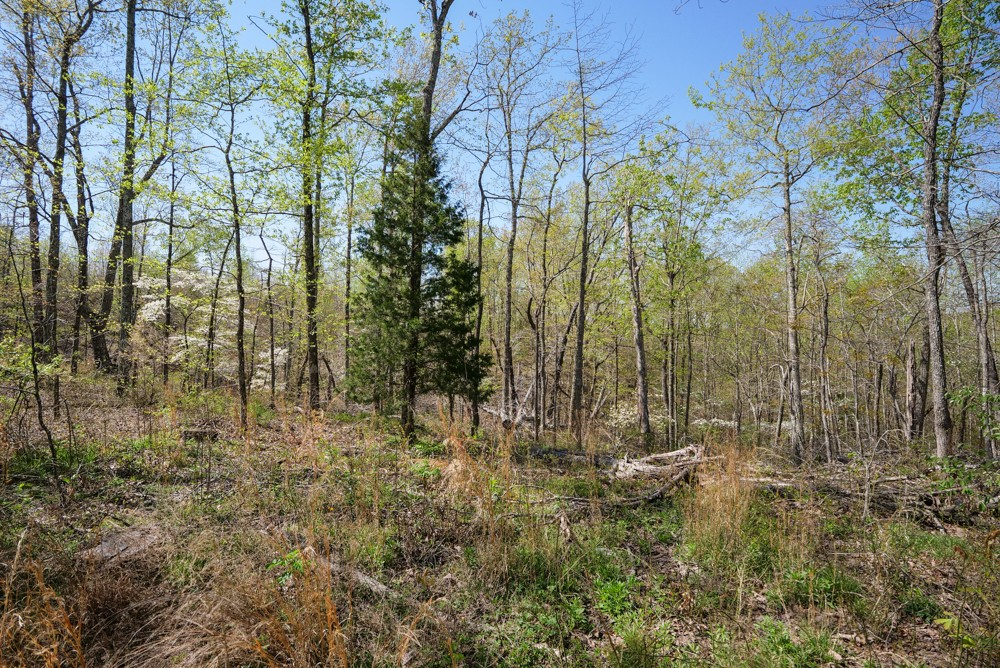 0G S Hurricane Creek Rd Property Photo - Linden, TN real estate listing
