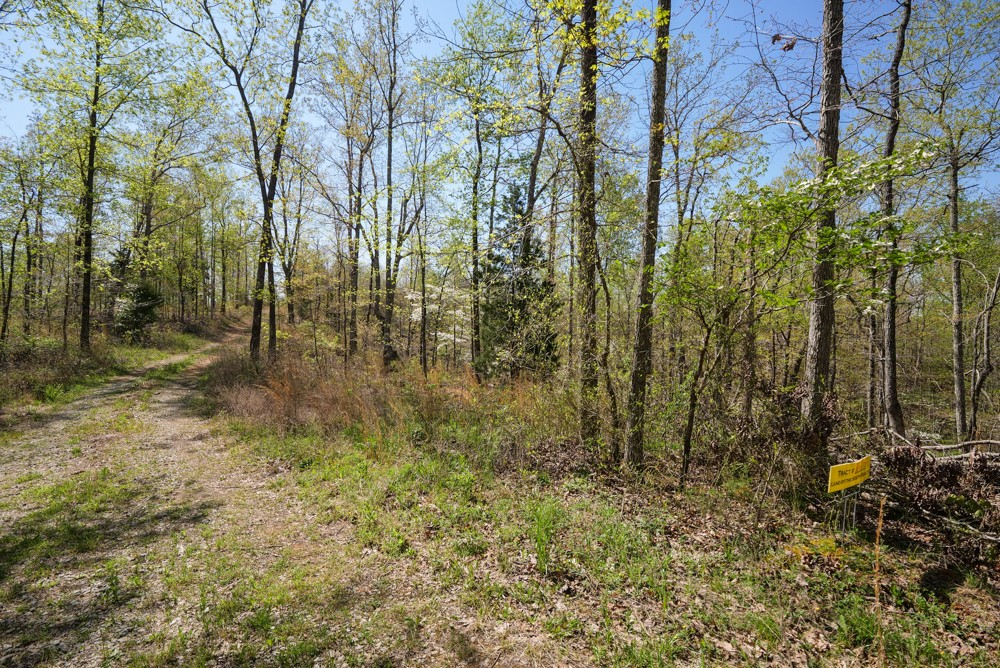 0L S Hurricane Creek Rd Property Photo - Linden, TN real estate listing