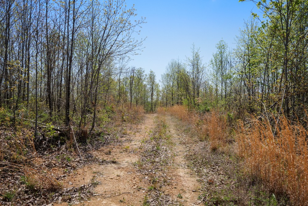 0M S Hurricane Creek Rd Property Photo - Linden, TN real estate listing