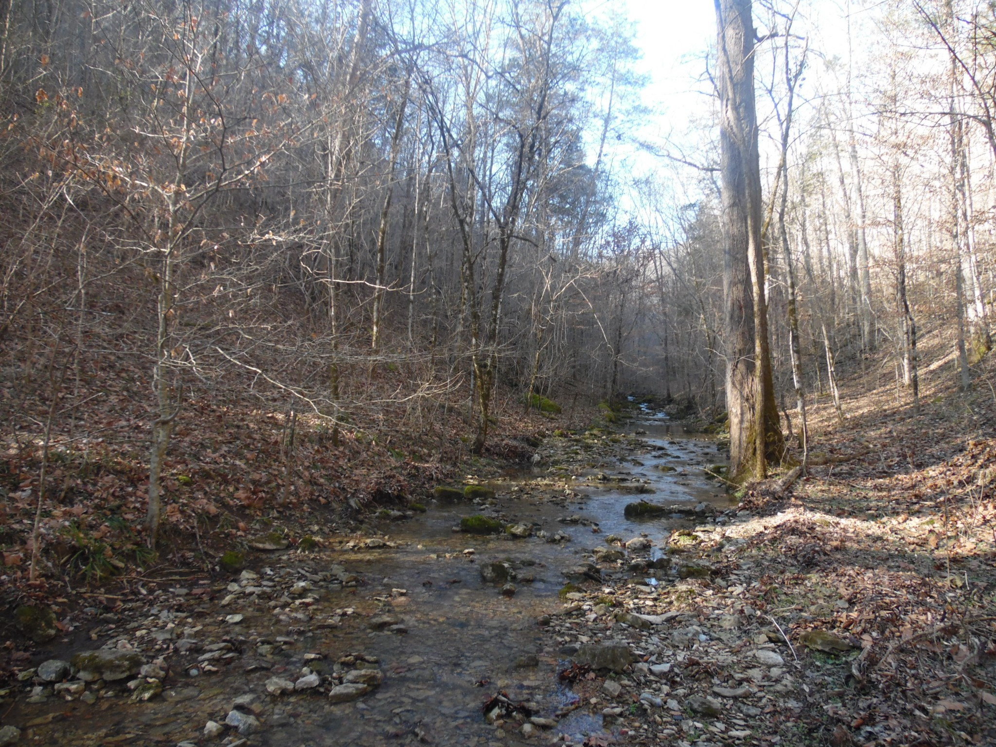 0 Brimstone Creek Rd Property Photo - Whitleyville, TN real estate listing