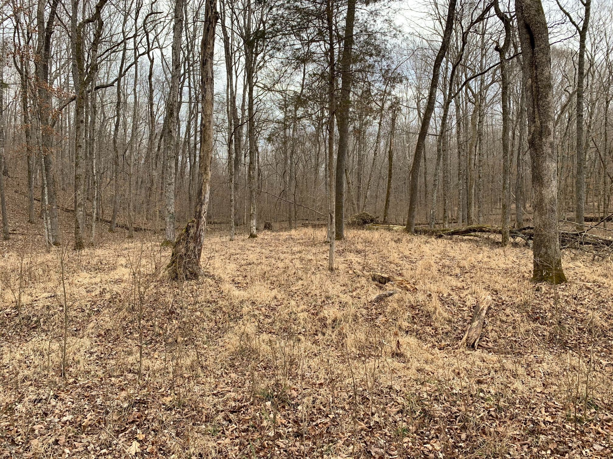 0 Hayes Rdg Rd Property Photo - Indian Mound, TN real estate listing