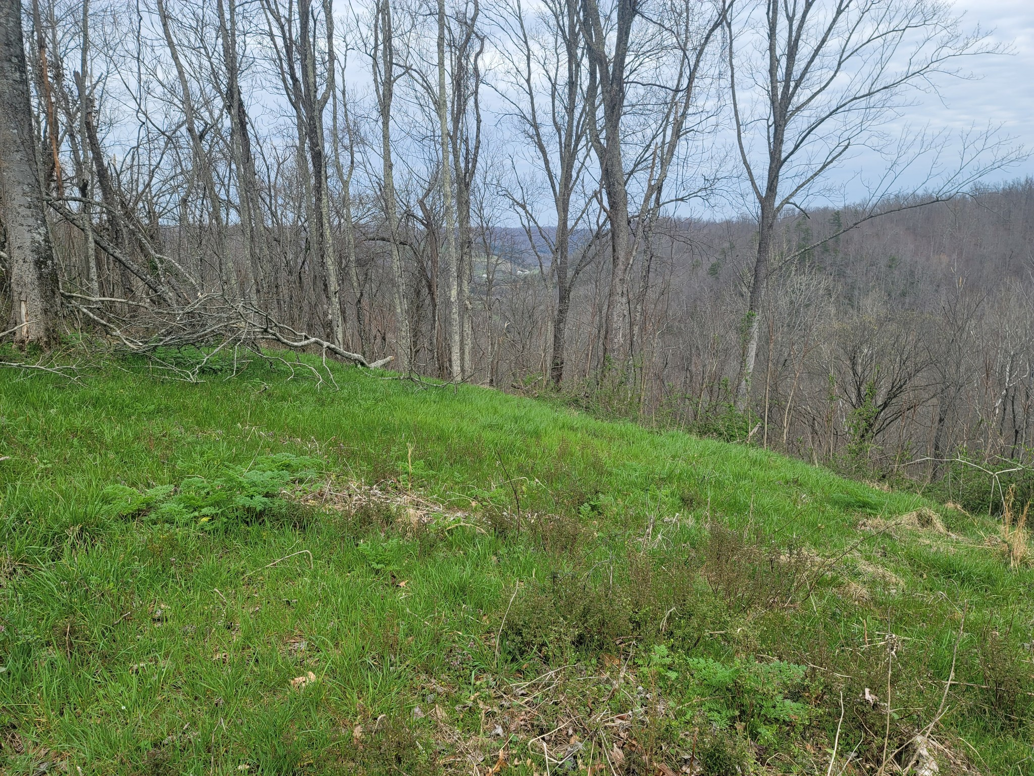 0 Old Mill Hill Rd Property Photo - Dowelltown, TN real estate listing