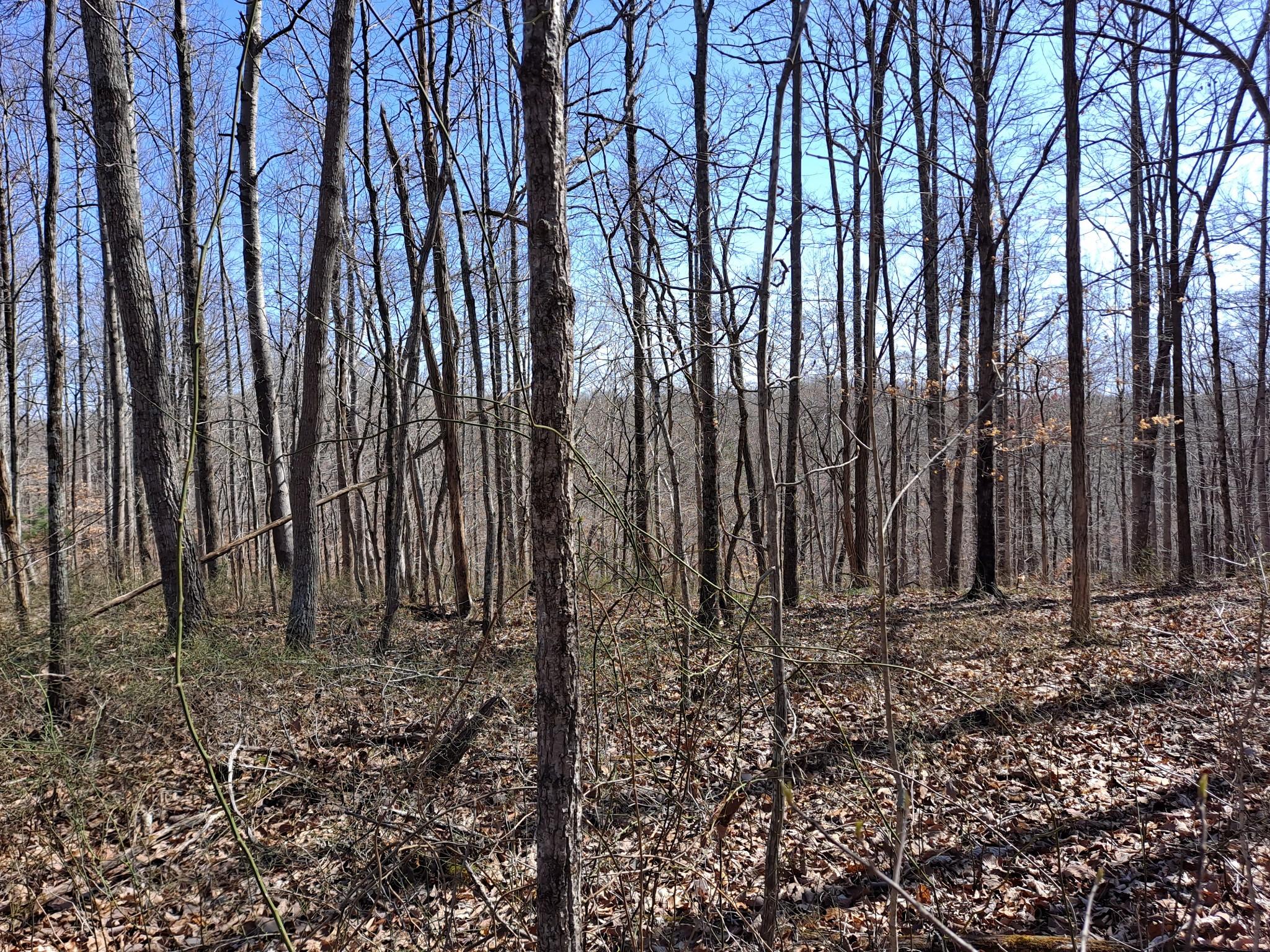0 Apache Trail Property Photo