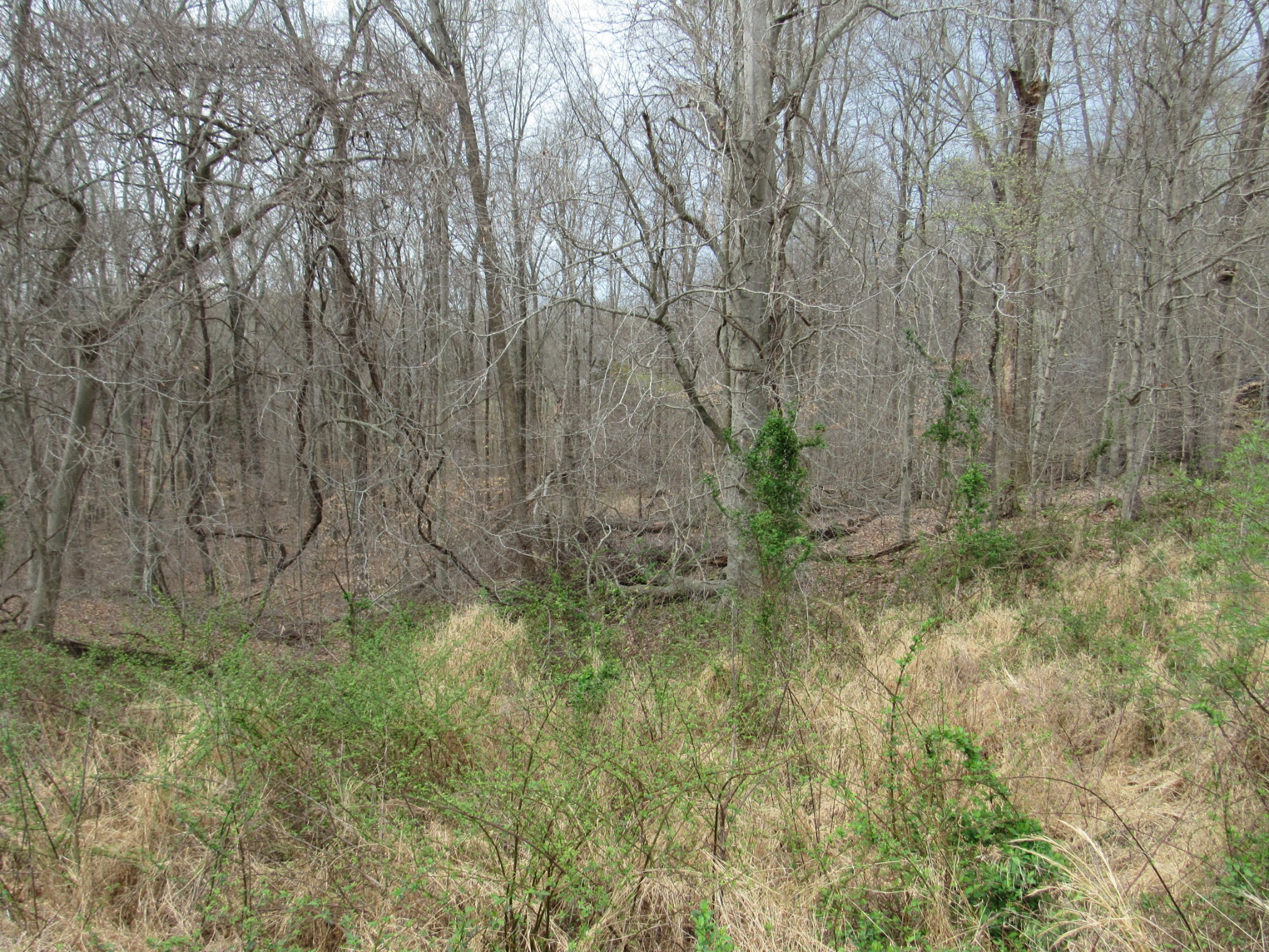 0 Reed Rd Property Photo - Indian Mound, TN real estate listing