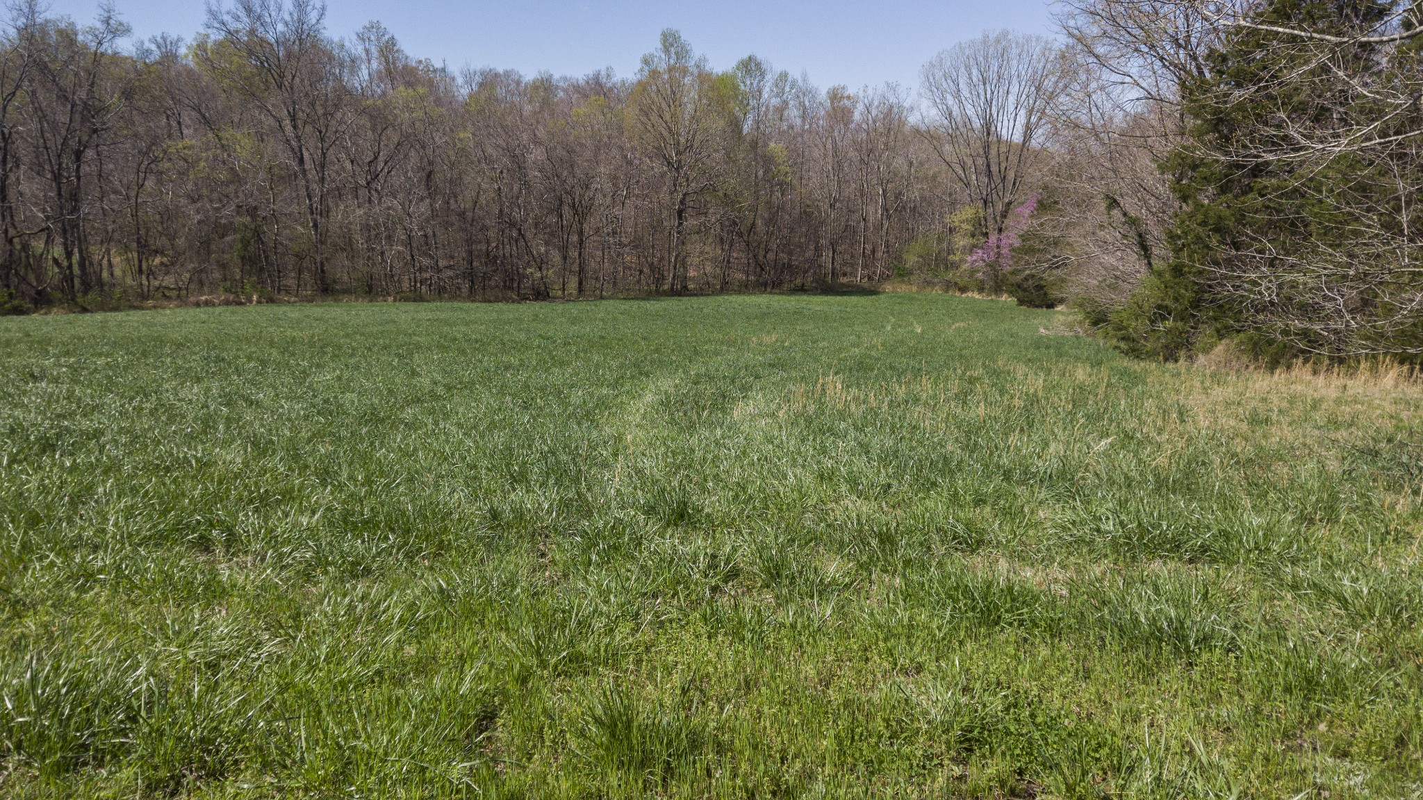 1019 Palmyra Road Property Photo - Clarksville, TN real estate listing