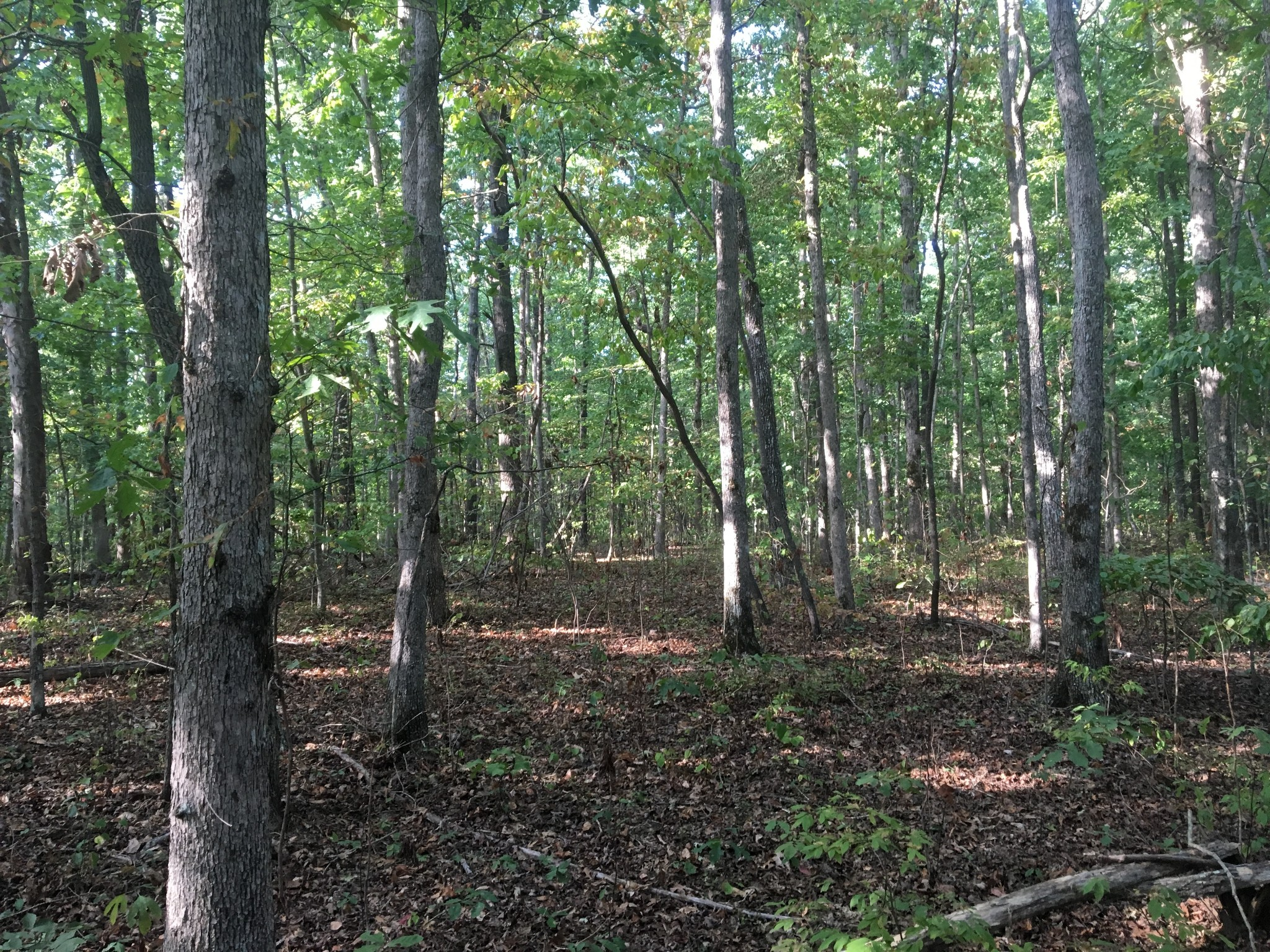 0 Deer Run Rd Property Photo - Altamont, TN real estate listing